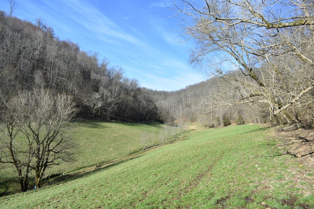 0 Dog Branch Rd N, Pleasant Shade, TN 37145 - Pleasant Shade, TN real estate listing