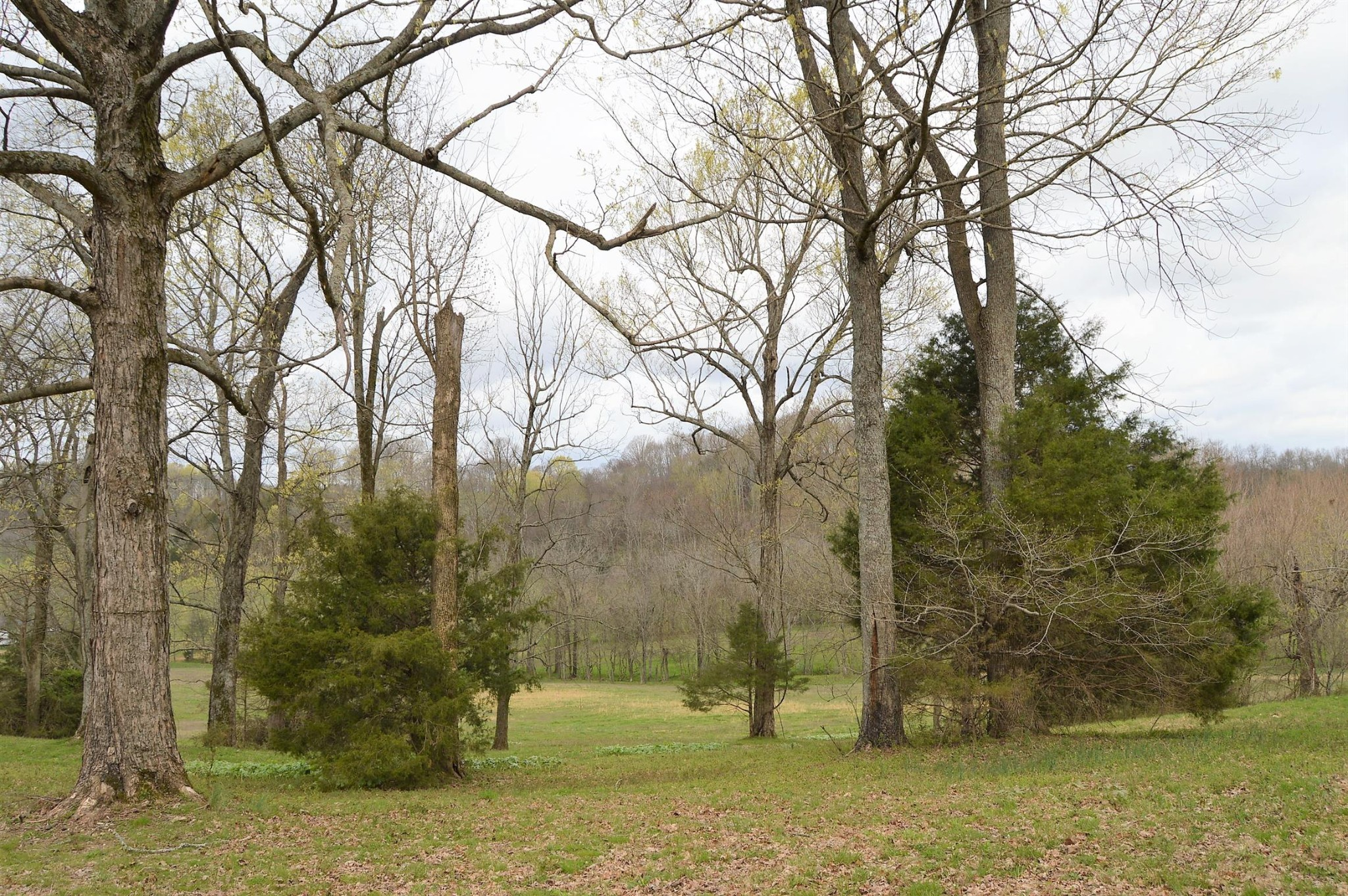 0 Carl Fox Rd Property Photo - Cornersville, TN real estate listing