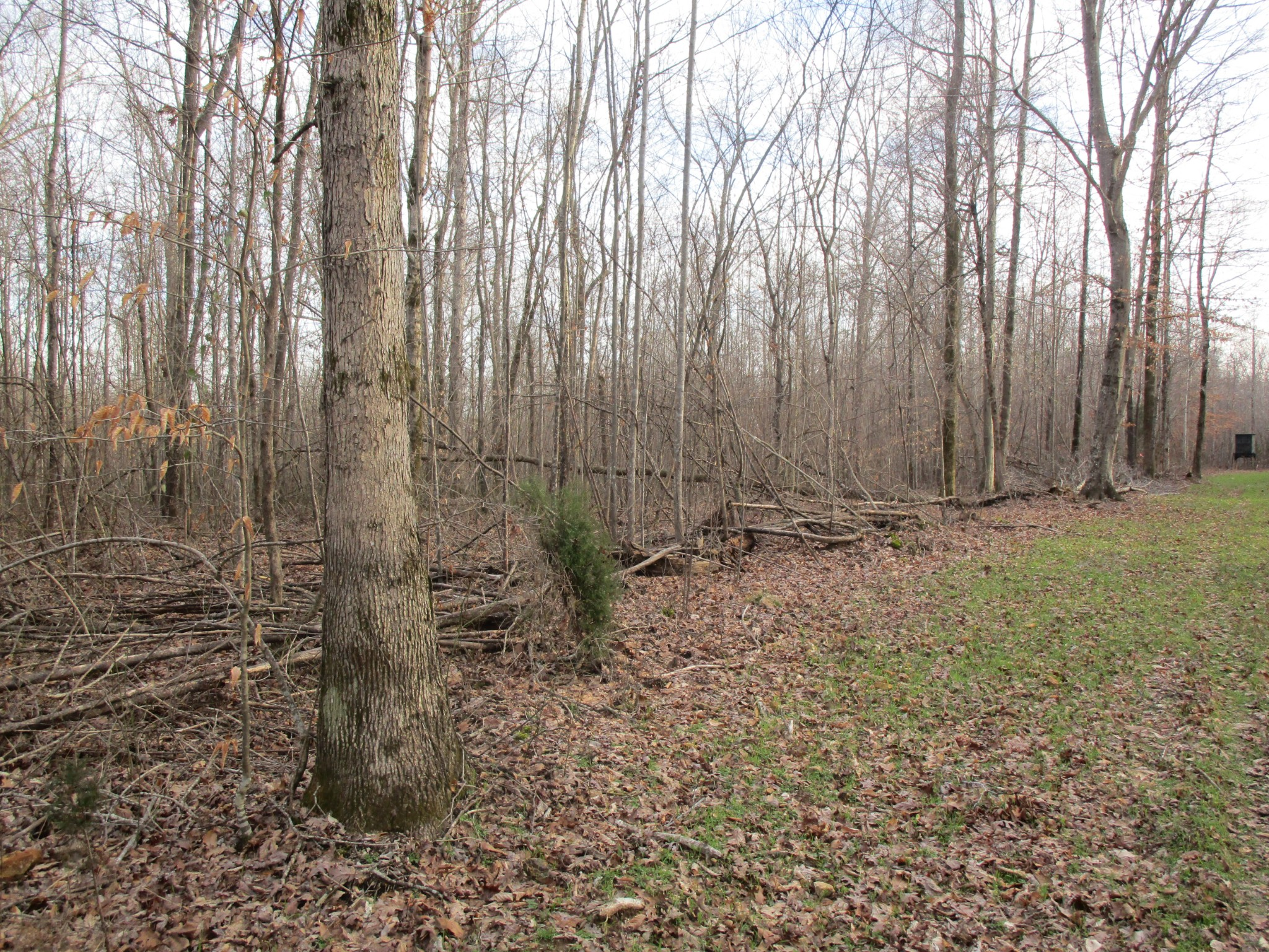 0 Muckle Branch Rd Property Photo - Ethridge, TN real estate listing