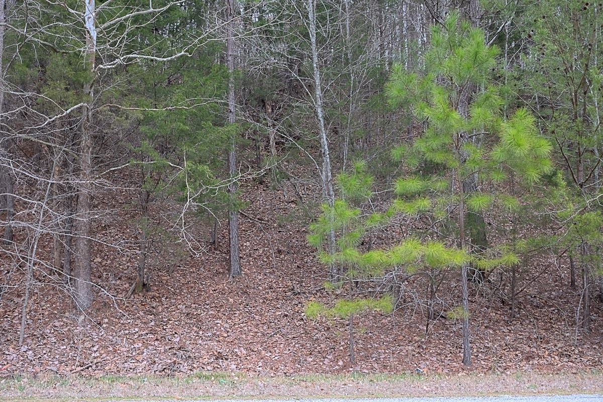 0 Panhandle Road Lot 3 Property Photo - Wartrace, TN real estate listing