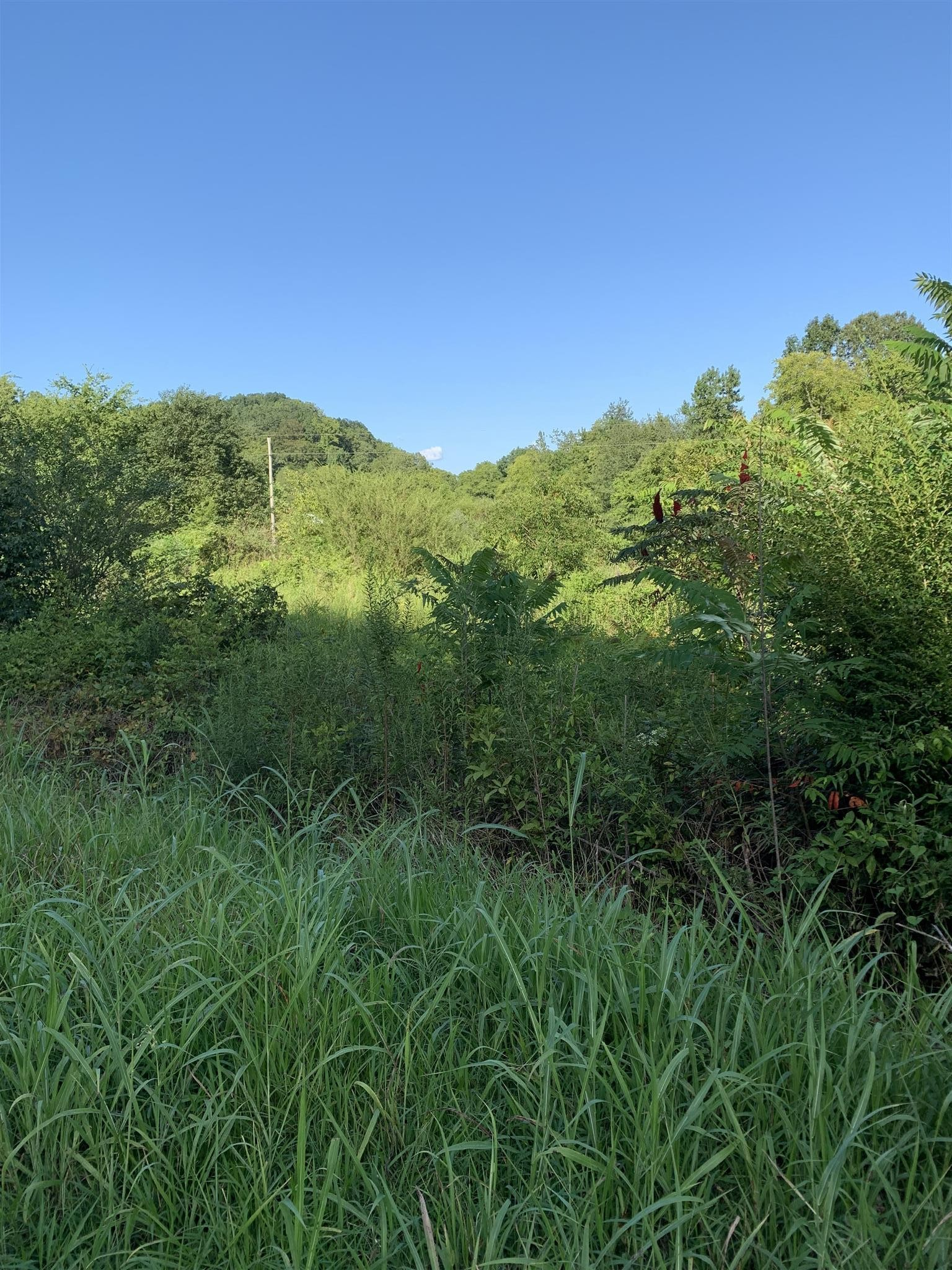 1 Hulsey Branch Rd Property Photo - Minor Hill, TN real estate listing