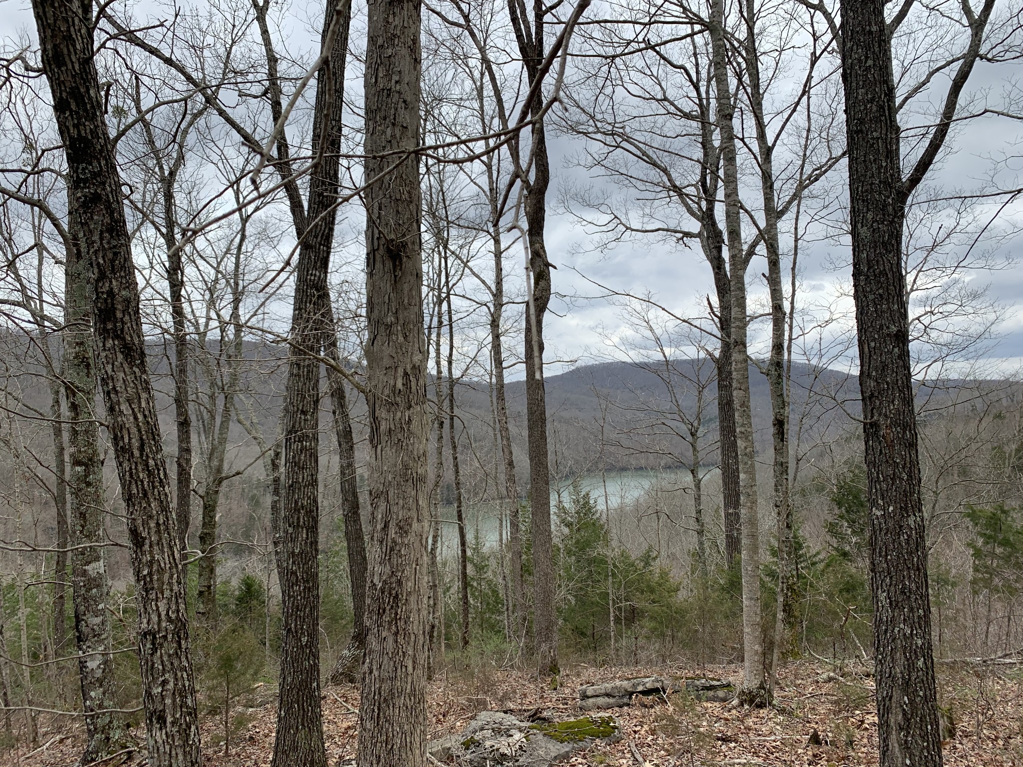 208 Sunset Pt Property Photo - Allons, TN real estate listing
