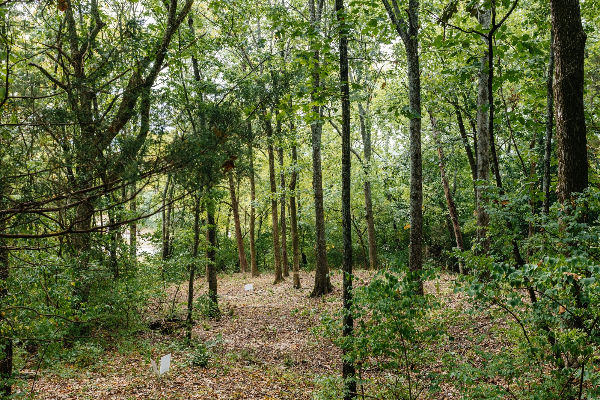 1741 Woodsong Dr (Lot #33) Property Photo