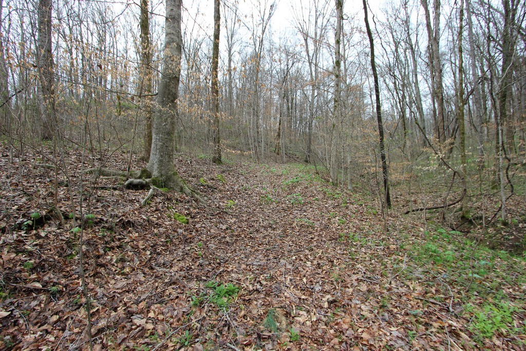 2770 Kerr Hill Rd Property Photo - Lynnville, TN real estate listing