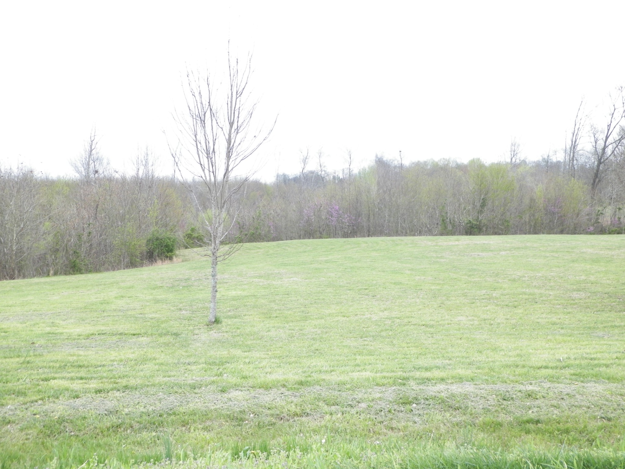 0 Carthage Rd, Red Boiling Springs, TN 37150 - Red Boiling Springs, TN real estate listing
