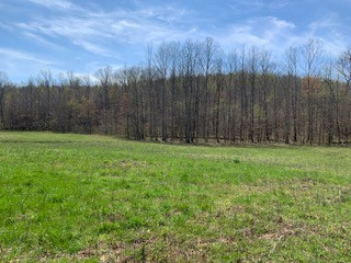 0 Flag Springs Rd Property Photo - Lynnville, TN real estate listing