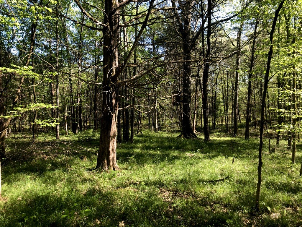 15.2 Acres Real Estate Listings Main Image