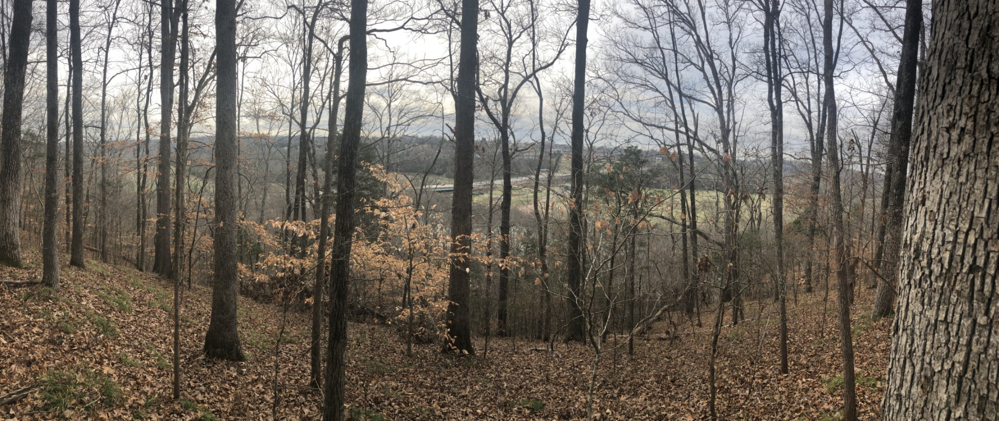 317 Highway 100 Lot 1 Property Photo - Centerville, TN real estate listing