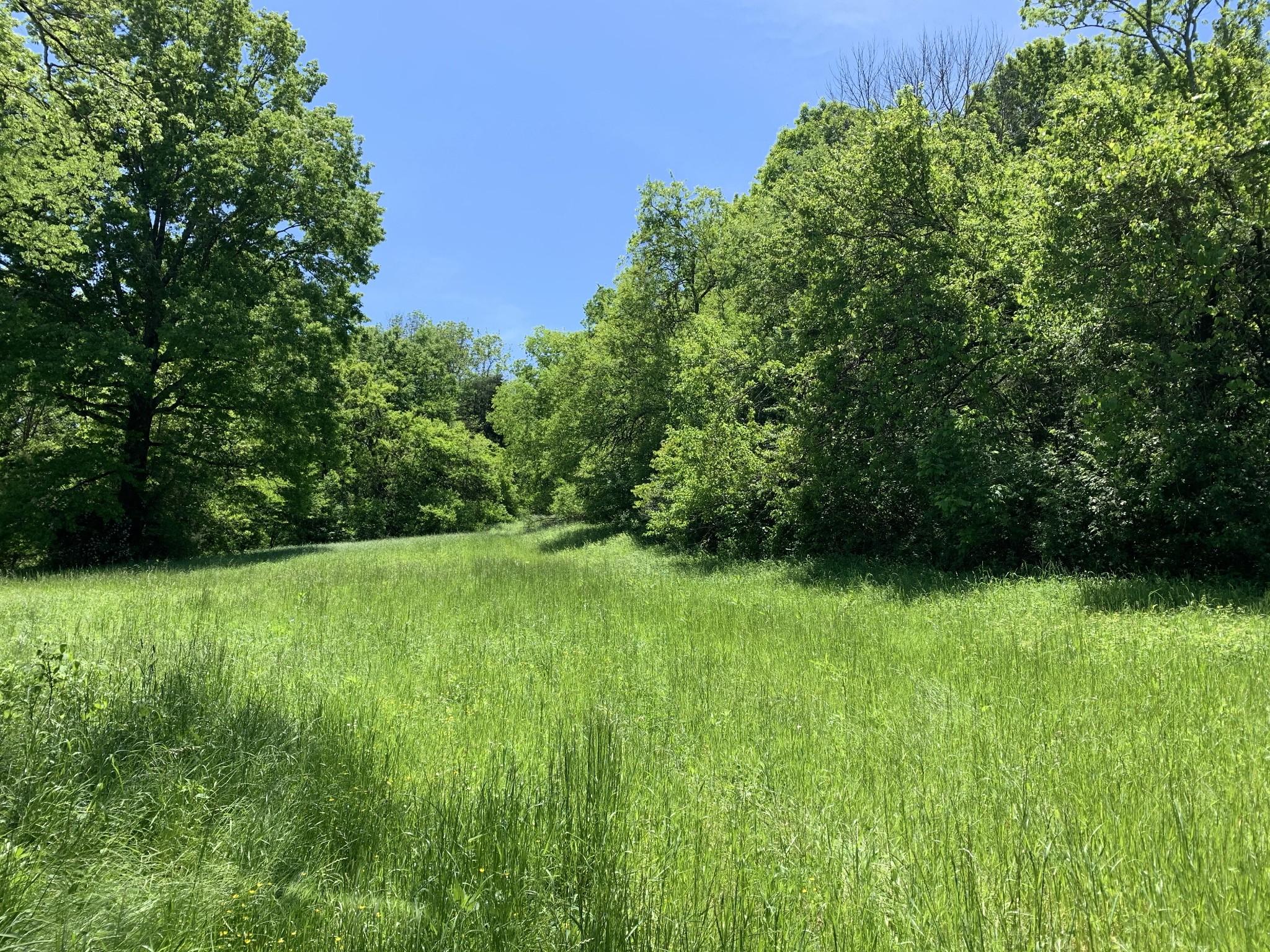 0 Blue Creek Rd Property Photo - Lynnville, TN real estate listing