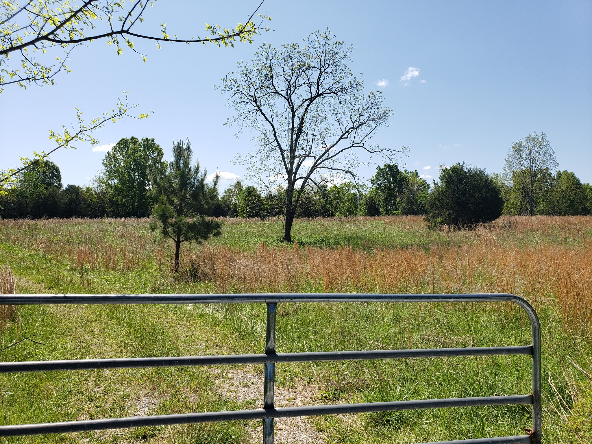 0 Snell Road Property Photo - Lewisburg, TN real estate listing