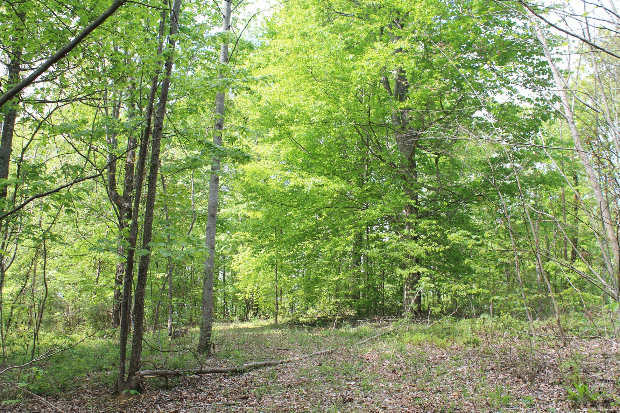 1347 Keeling Branch Hwy Property Photo - Whitleyville, TN real estate listing