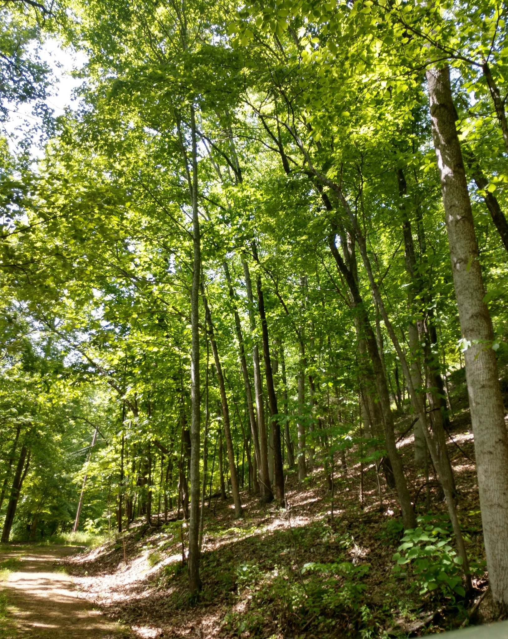 0 Love Colony Road Property Photo - Smithville, TN real estate listing