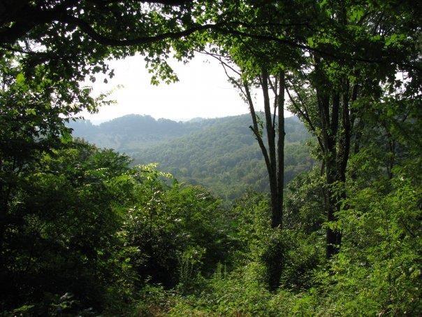 0 Dale Ridge Rd Property Photo - Lancaster, TN real estate listing