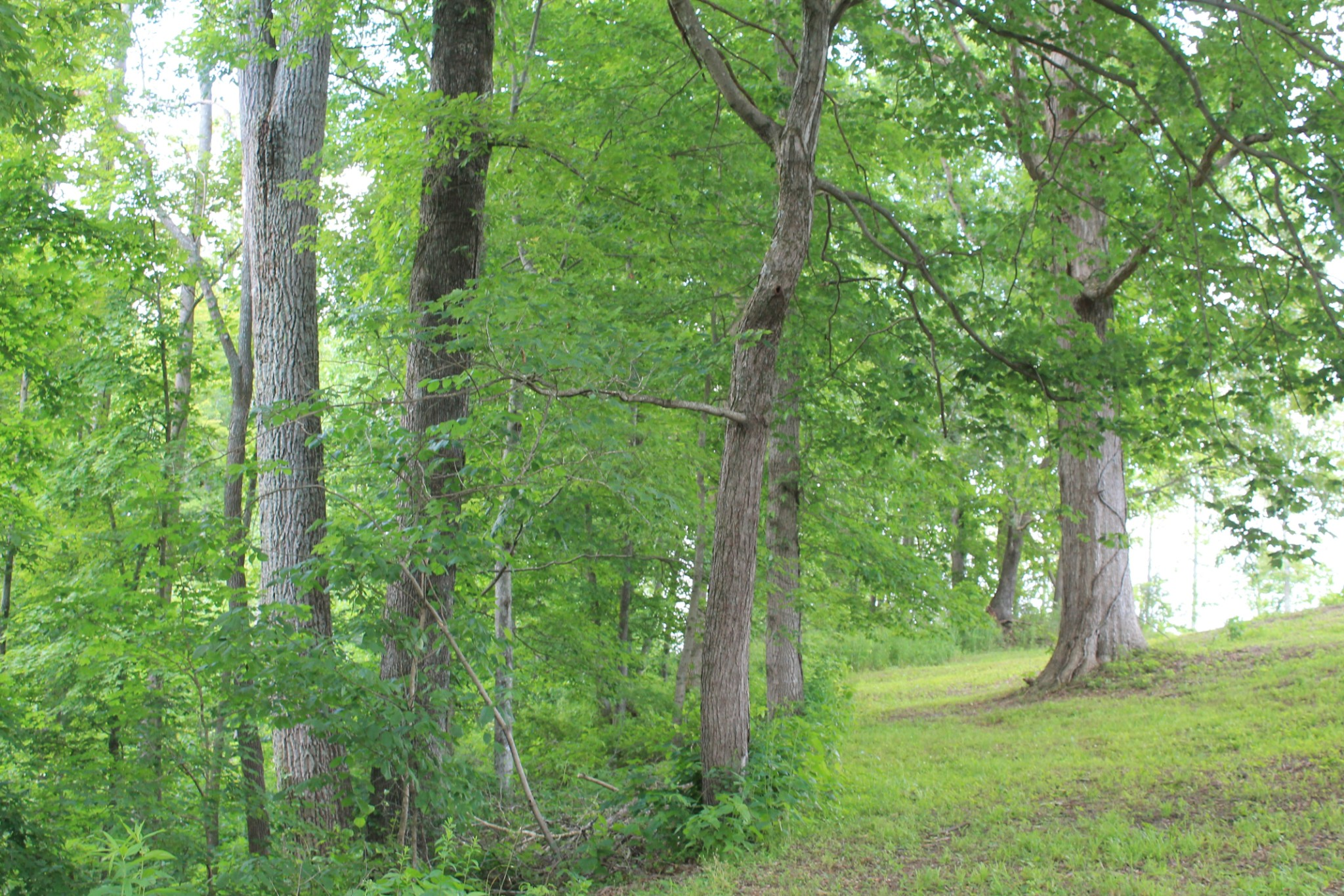 0 Riley Creek Road Property Photo - Whitleyville, TN real estate listing