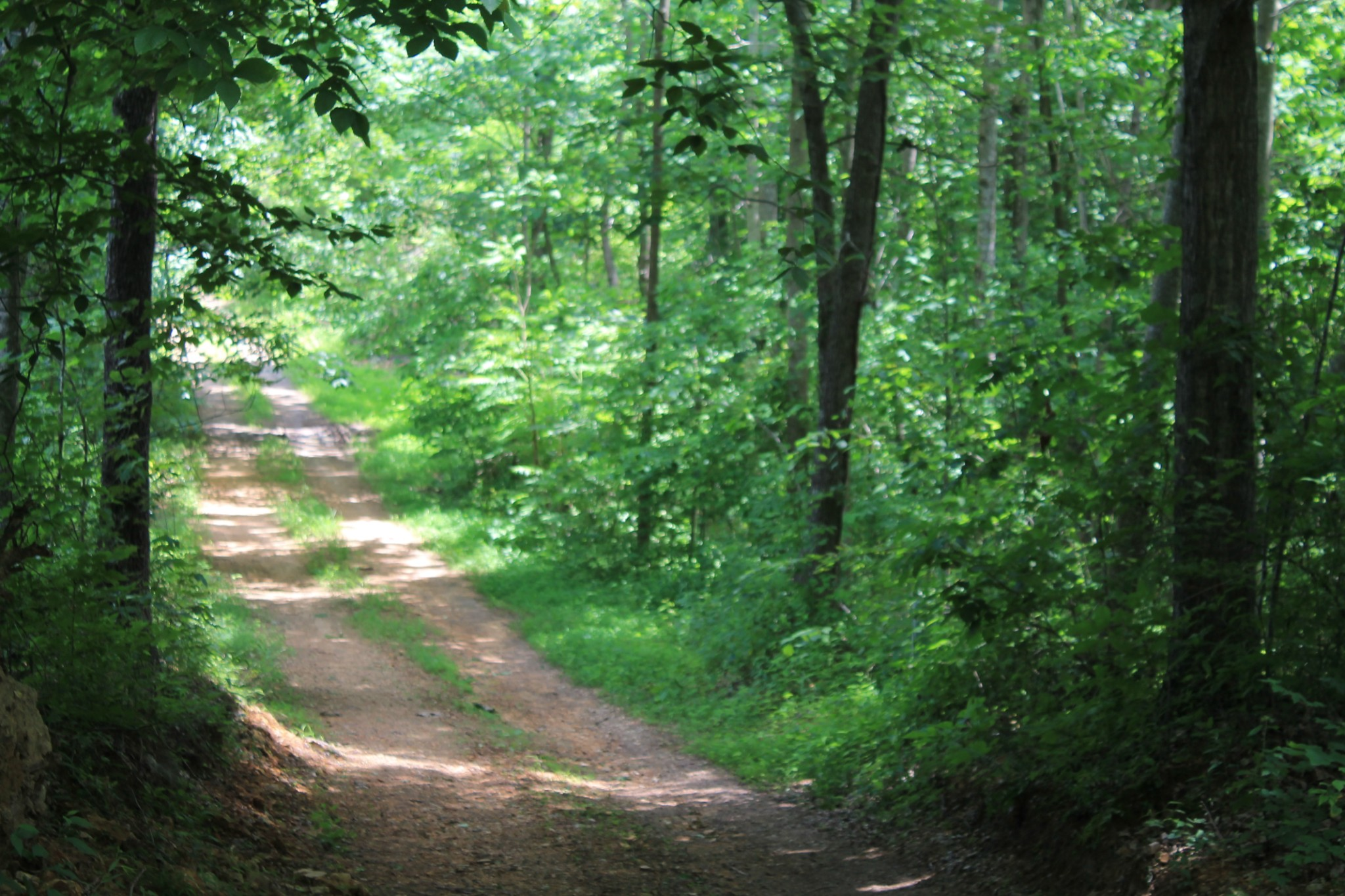 0 Skaggs Branch Rd Property Photo - Whitleyville, TN real estate listing