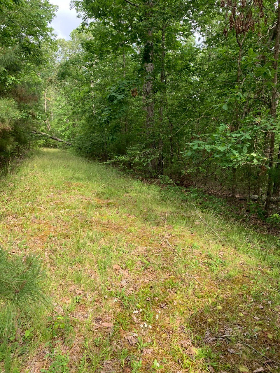 0 Beaver Creek Dr Property Photo - Parsons, TN real estate listing