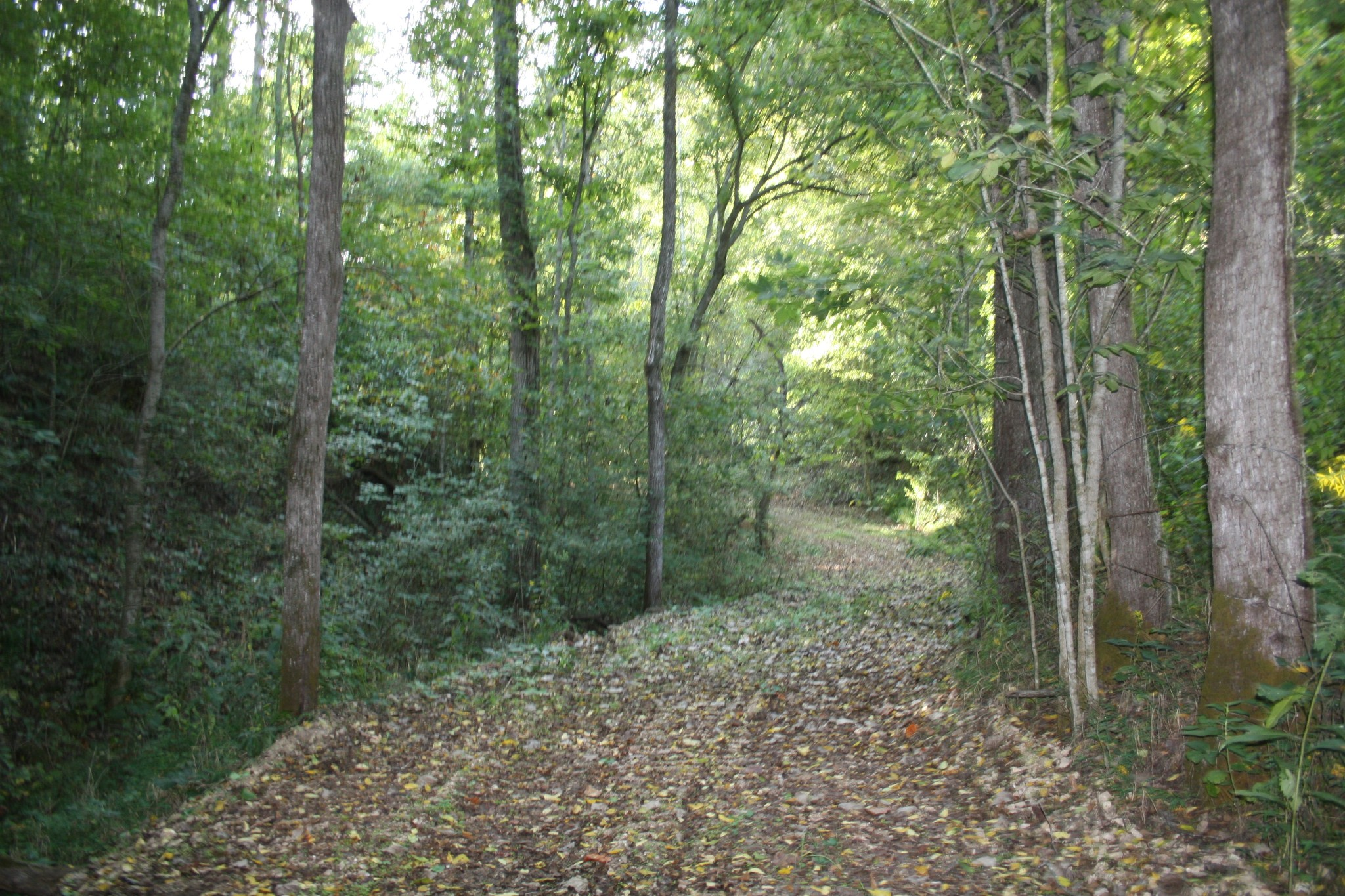 0 Coconut Ridge N Property Photo - Smithville, TN real estate listing