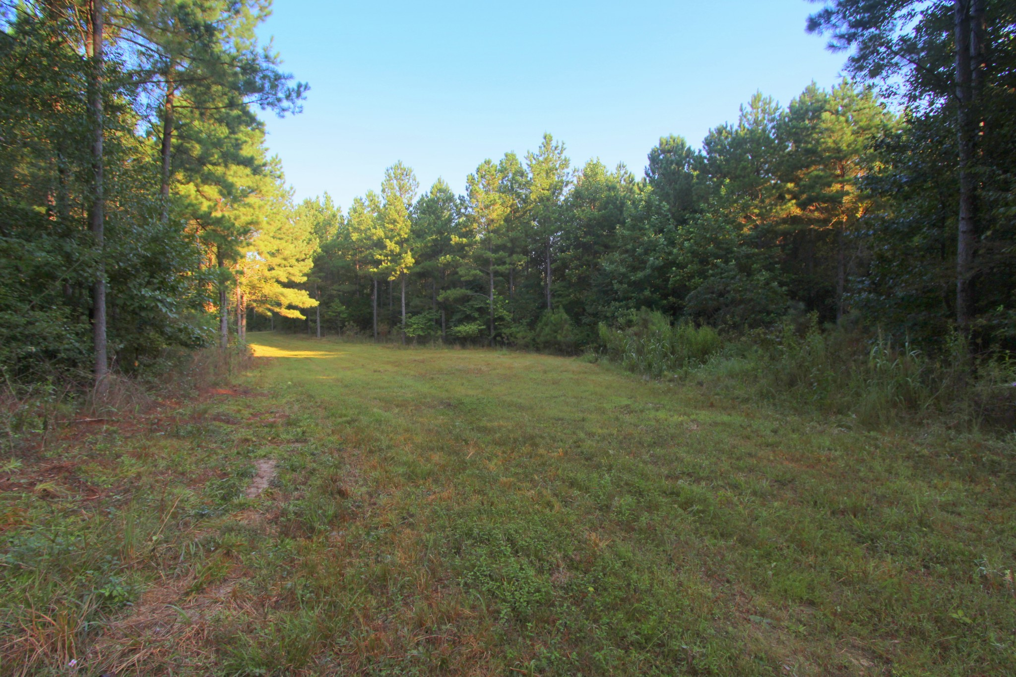 0 Highway 641 S Property Photo - Holladay, TN real estate listing