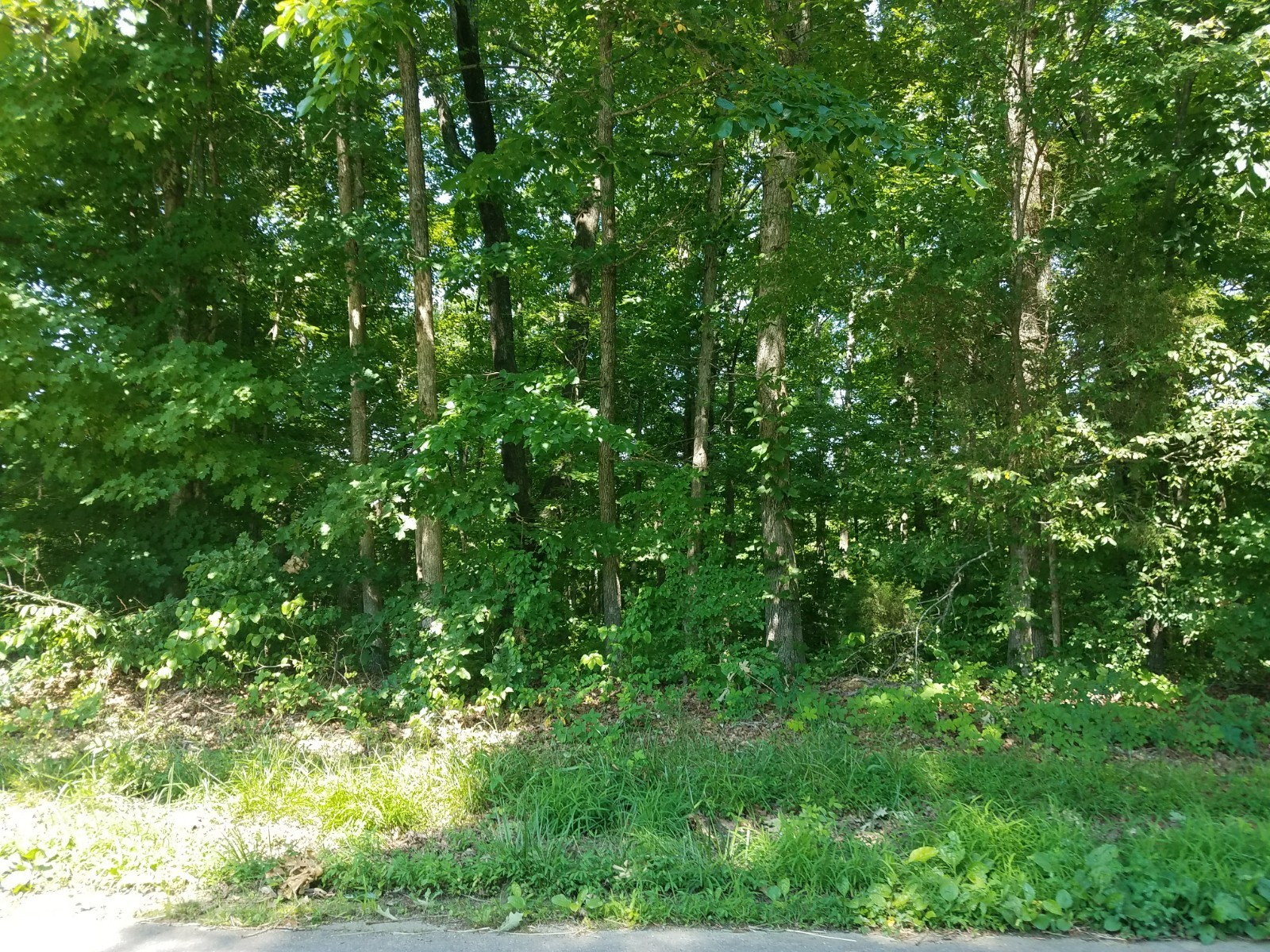 0 Greer Rd Property Photo - Lyles, TN real estate listing