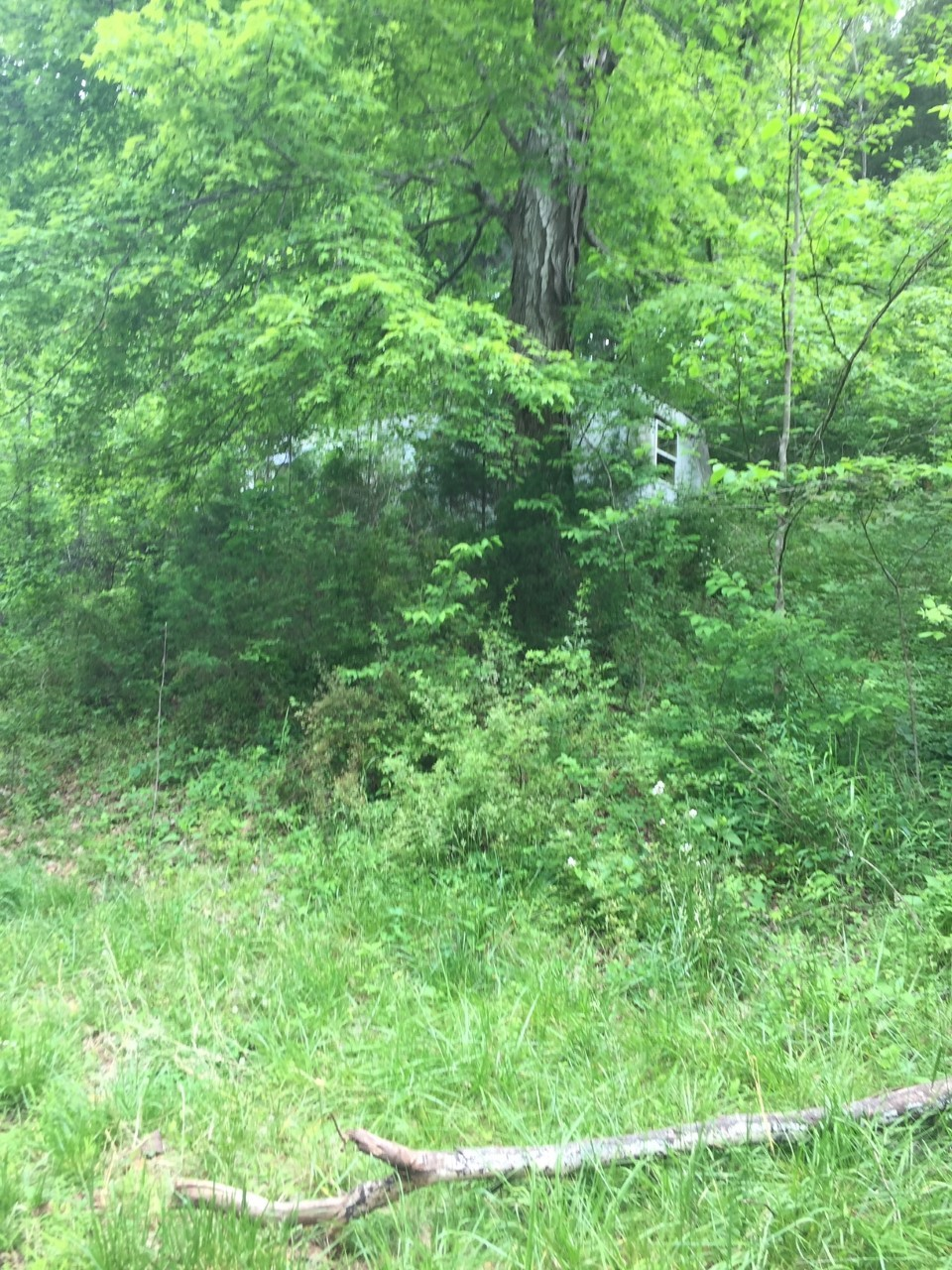 1275 Charles Holt Rd Property Photo - Adams, TN real estate listing