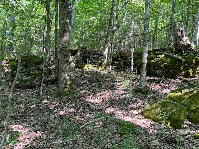 0 Porter Hollow Rd Property Photo - Linden, TN real estate listing