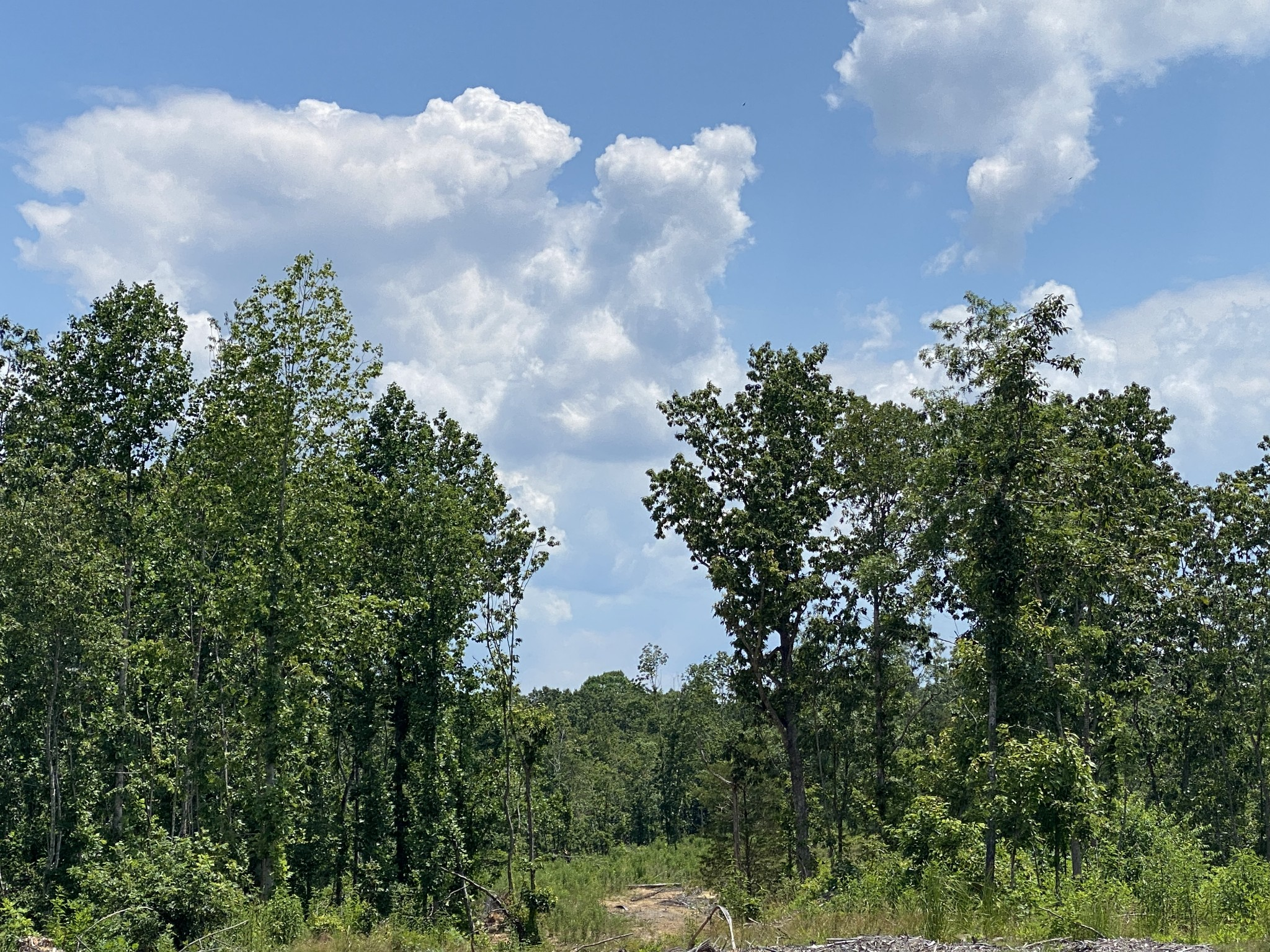 0 Birdsong road Property Photo - Camden, TN real estate listing