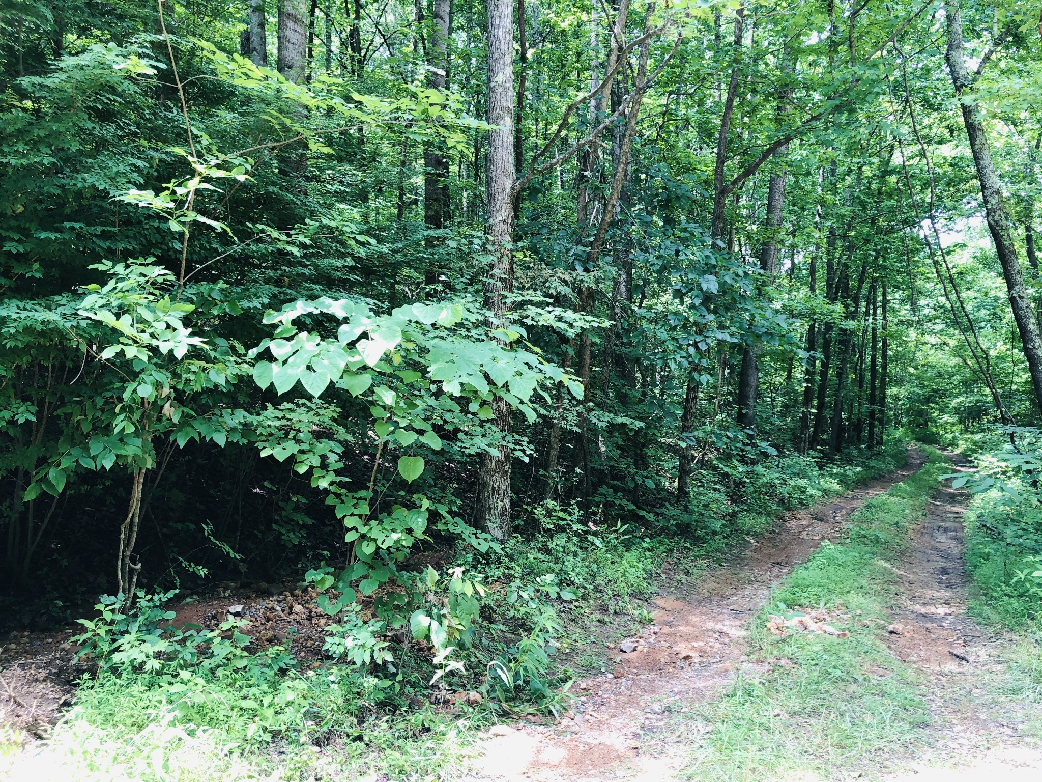 1 Park Drive Property Photo - Bumpus Mills, TN real estate listing