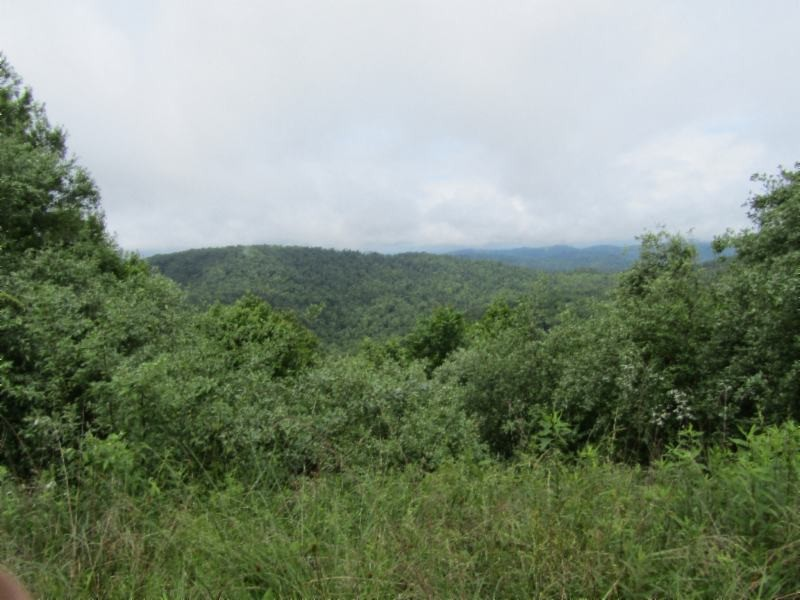 447 Smith Creek Road Property Photo - Pioneer, TN real estate listing