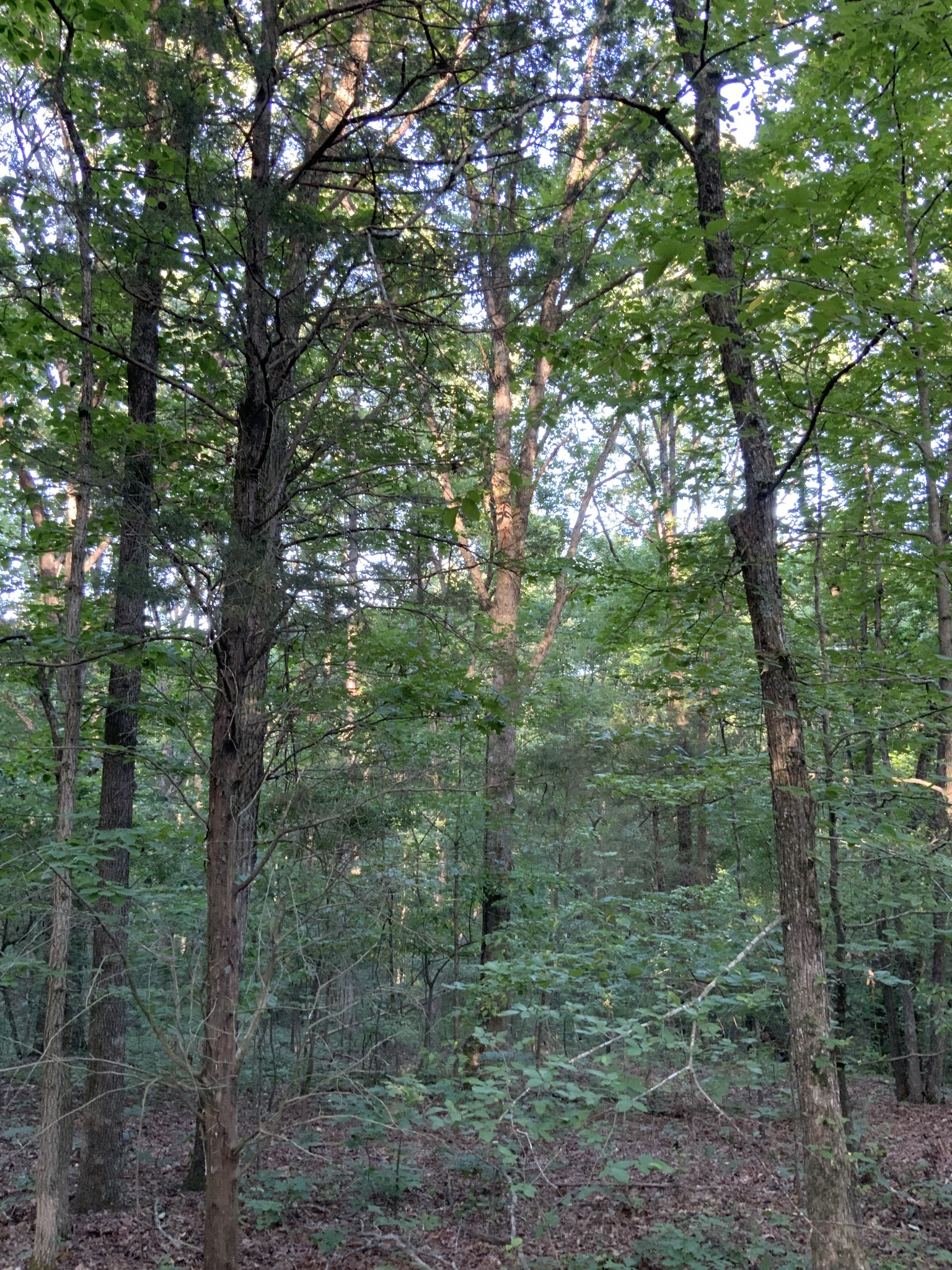 0 Cherry Grove Road Property Photo - Camden, TN real estate listing