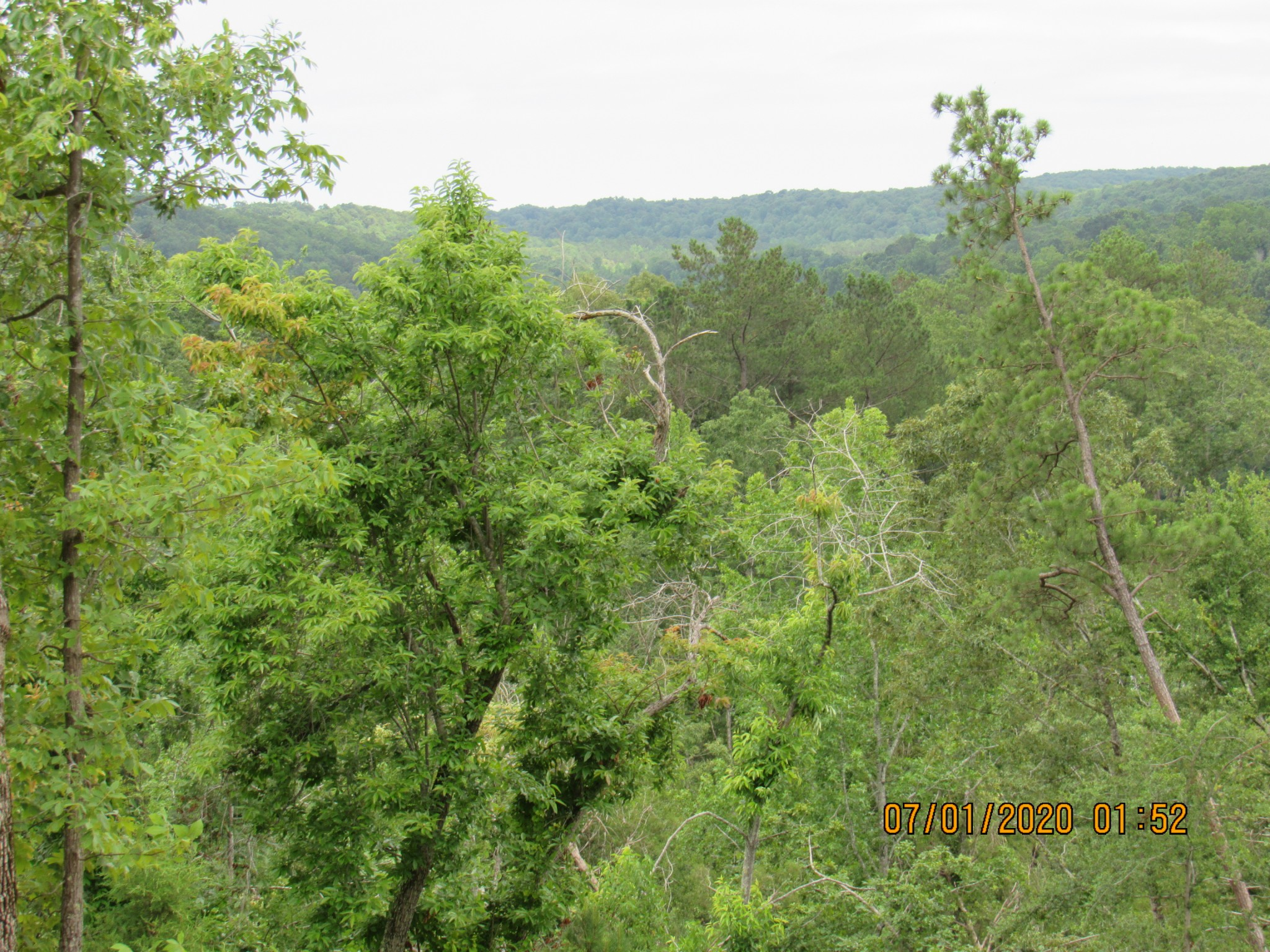 6000 Cuba Landing Rd Property Photo - Hurricane Mills, TN real estate listing