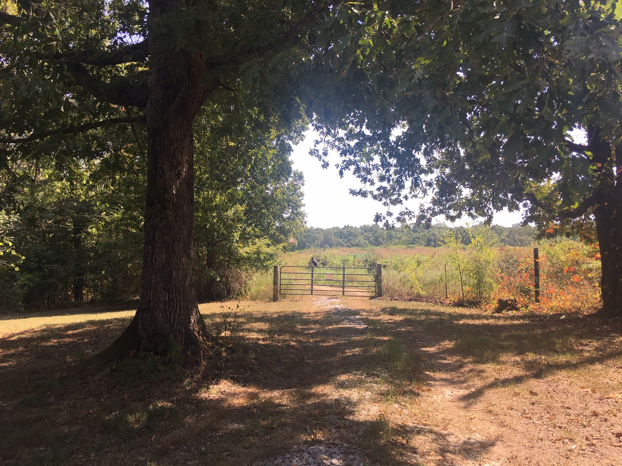 0 Shoals Branch Rd 7840 Property Photo - Primm Springs, TN real estate listing