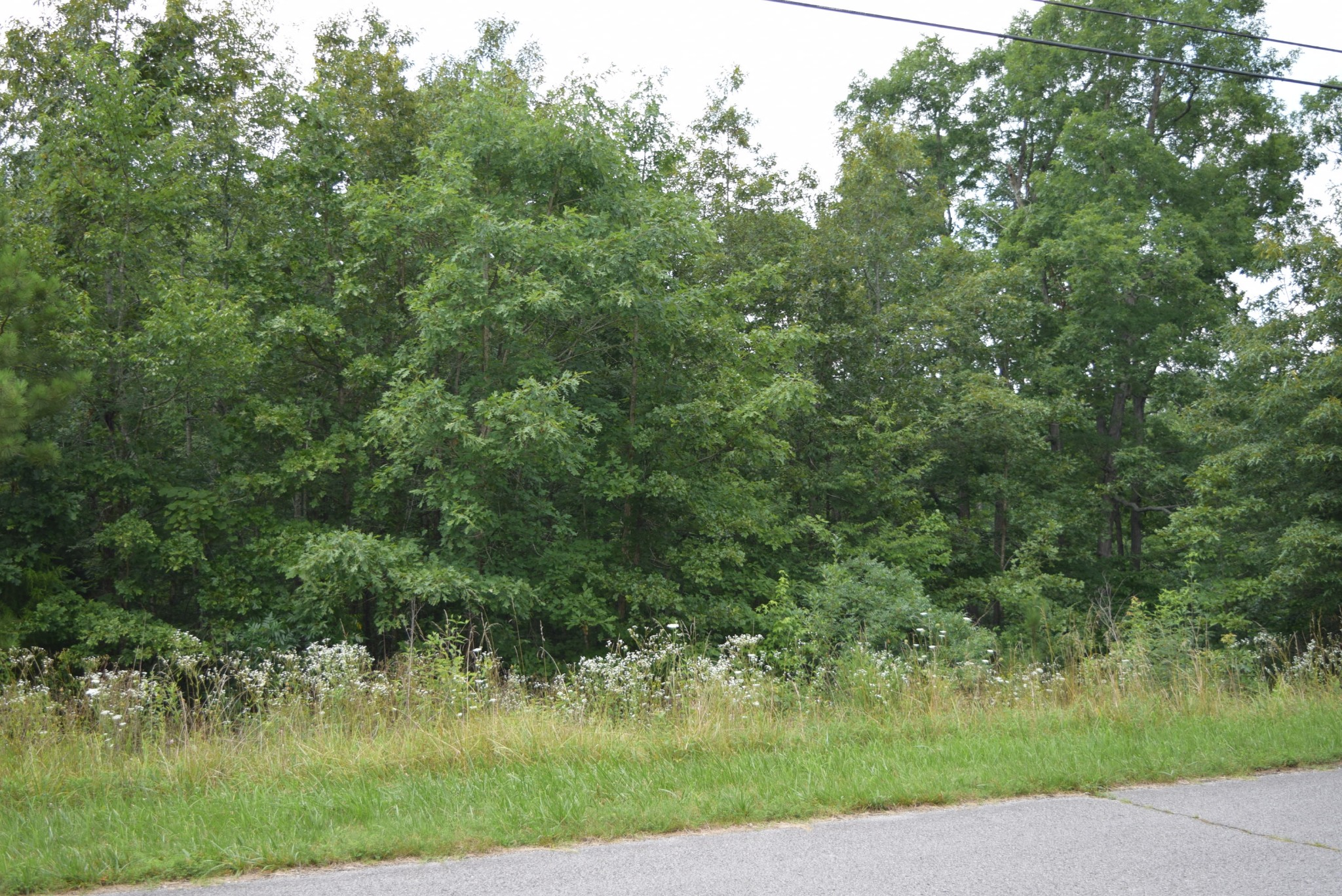 0 Emerald Acres Dr Property Photo - Erin, TN real estate listing