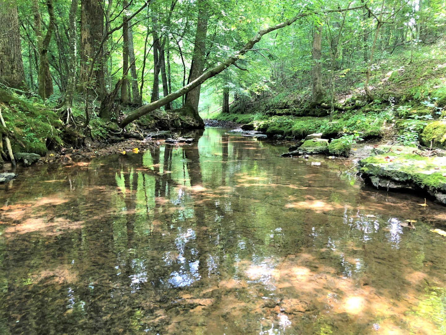 0 St. Mary Rd. Property Photo - Loretto, TN real estate listing