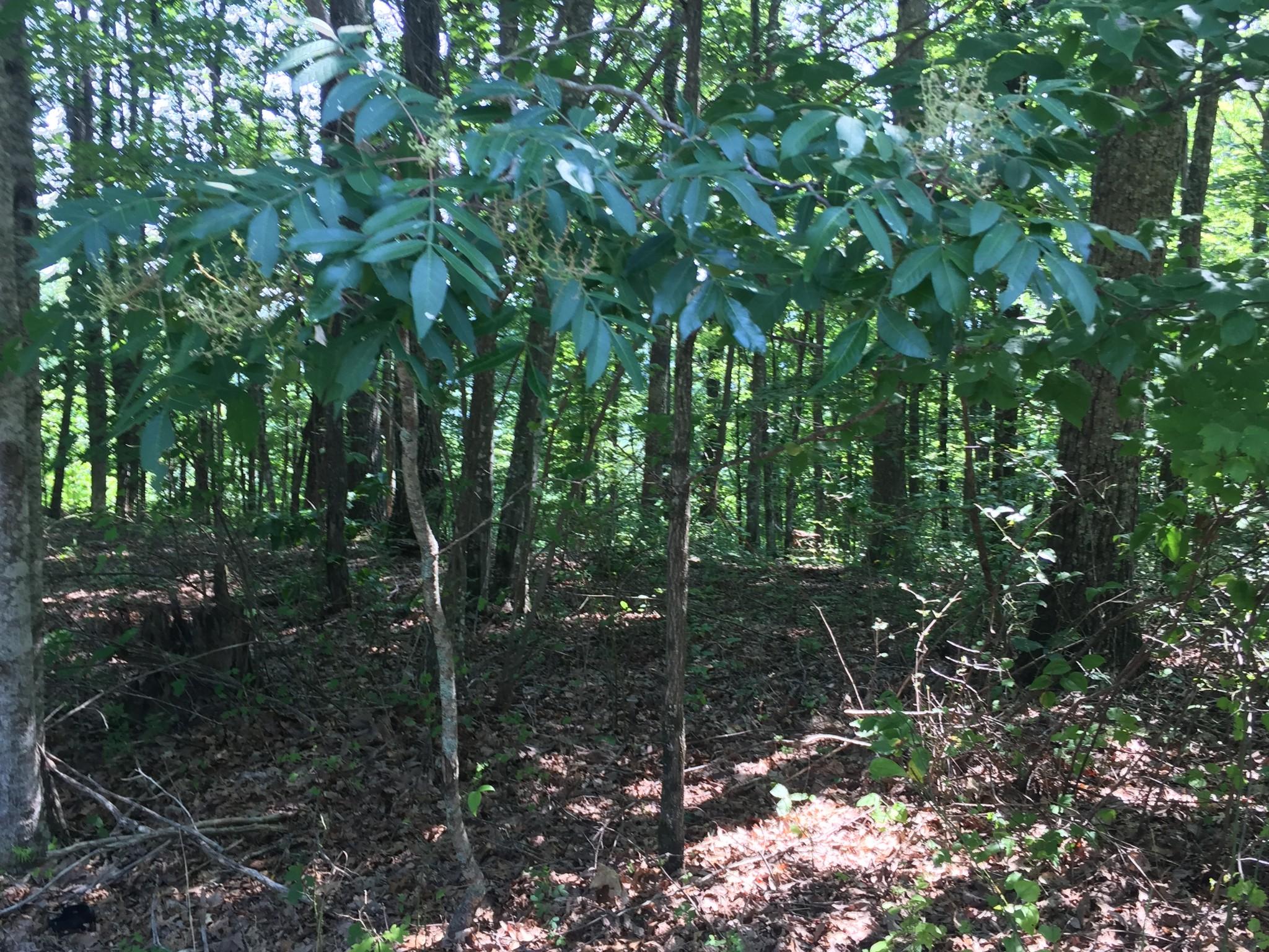 0 Ridge Cliff Estates Property Photo