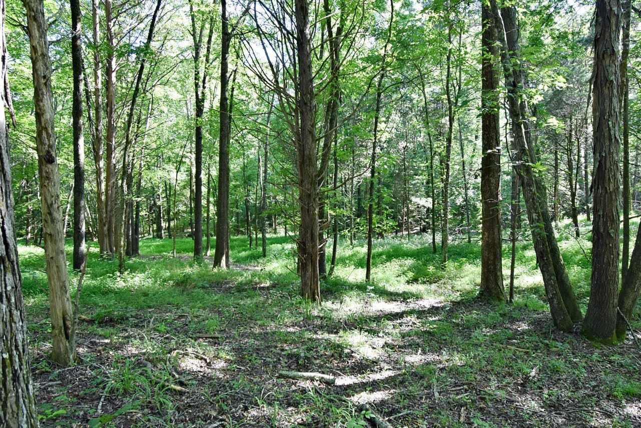 0 Yarbro Landing Rd. Property Photo - Decaturville, TN real estate listing