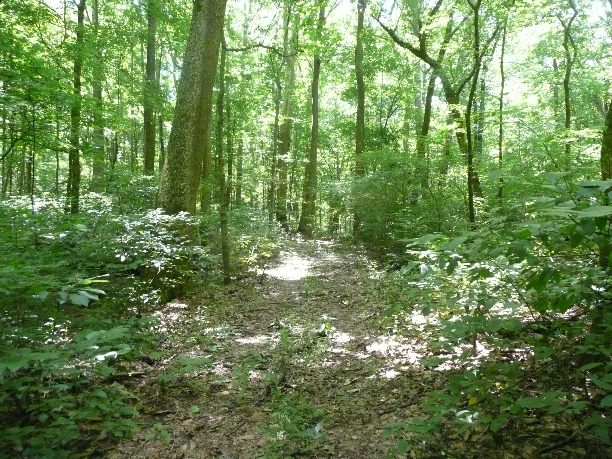 0 Happy Hollow Rd Property Photo - Goodlettsville, TN real estate listing