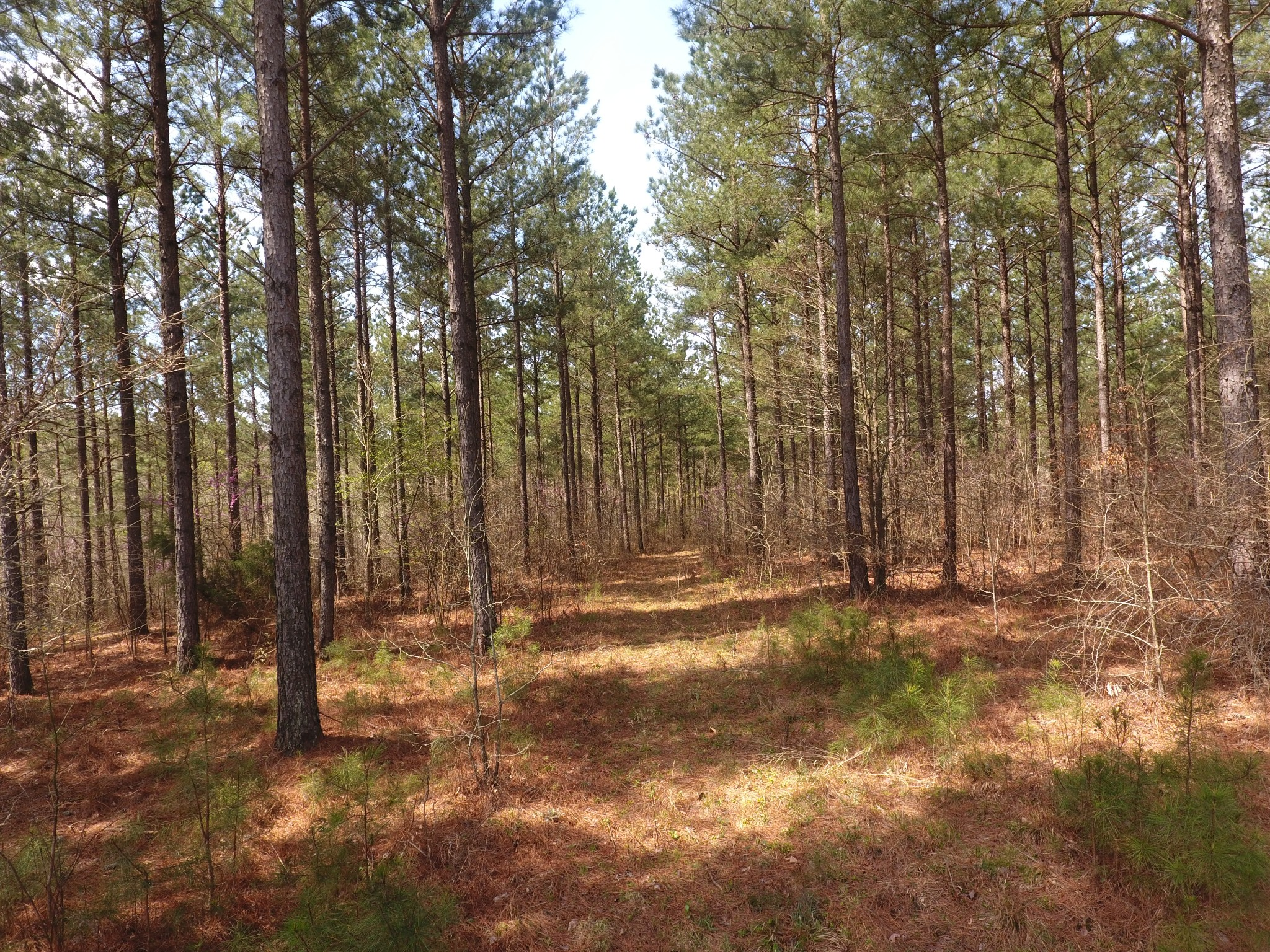 0 Mathis Cemetery Rd Property Photo - Stewart, TN real estate listing
