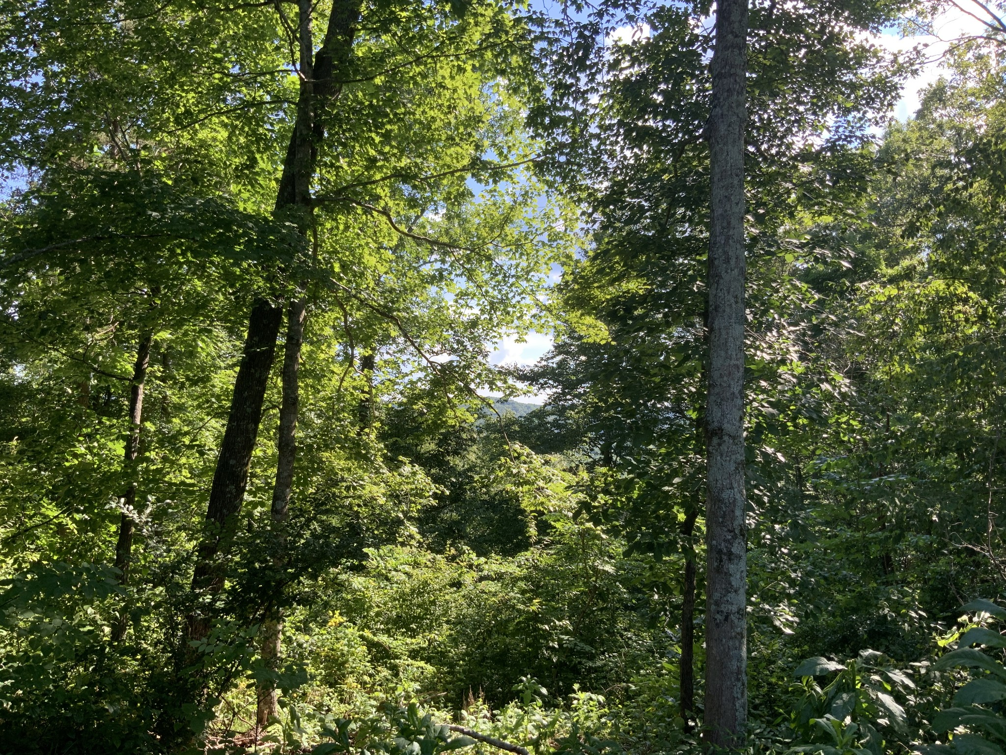 0 Cane Creek Road Property Photo - Centerville, TN real estate listing