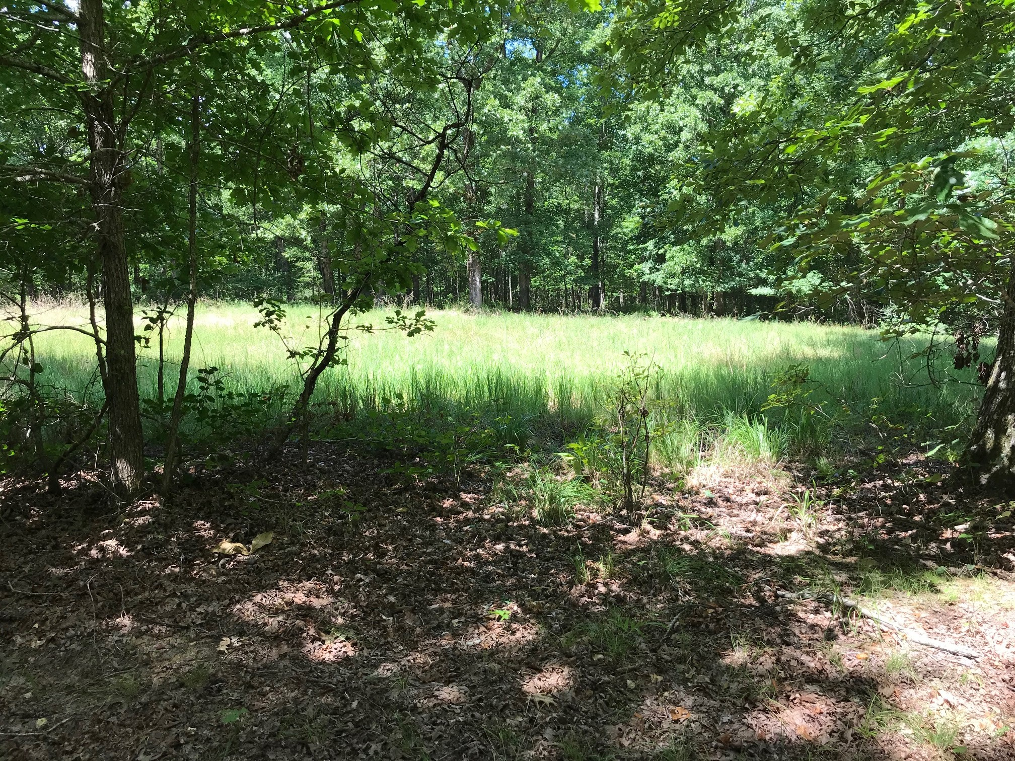 0 Old Richmond Road SW Property Photo - Nunnelly, TN real estate listing