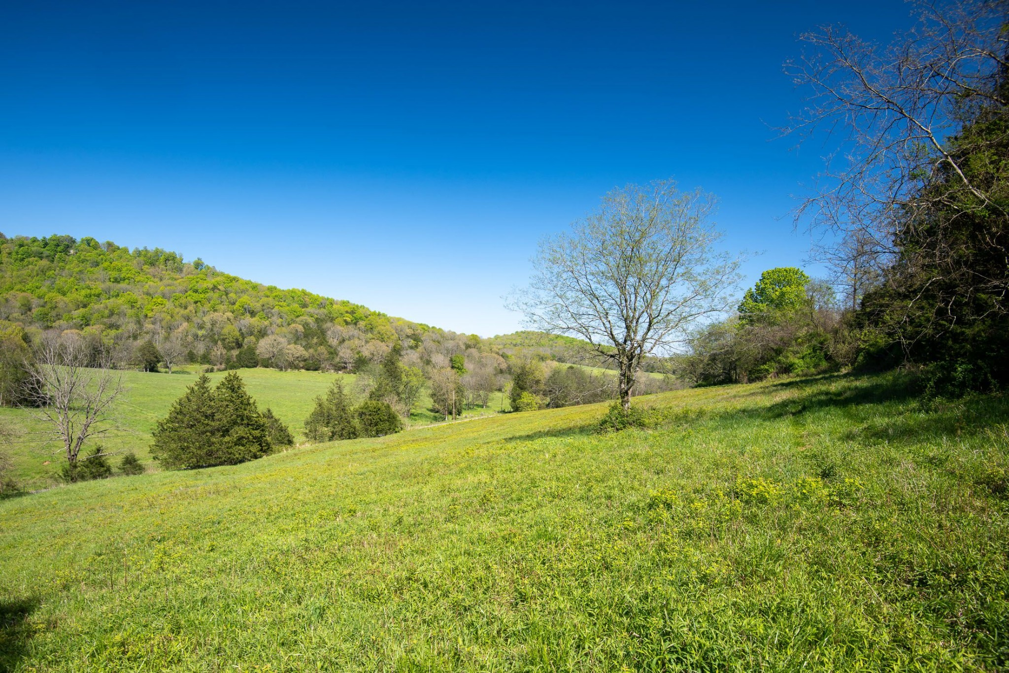 0 Patton Hollow Road Property Photo - Watertown, TN real estate listing