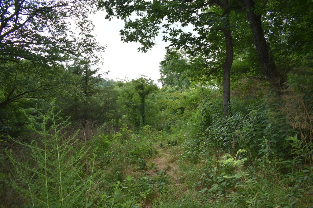 0 Maggart Rd Property Photo - Elmwood, TN real estate listing