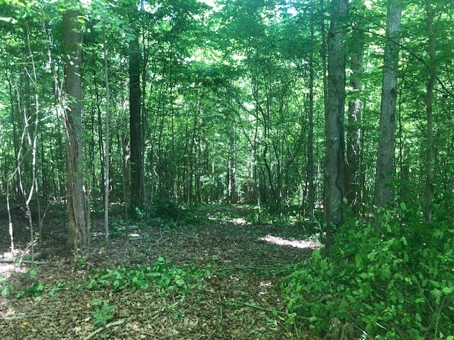 4 W Lick Creek Rd Property Photo - Primm Springs, TN real estate listing