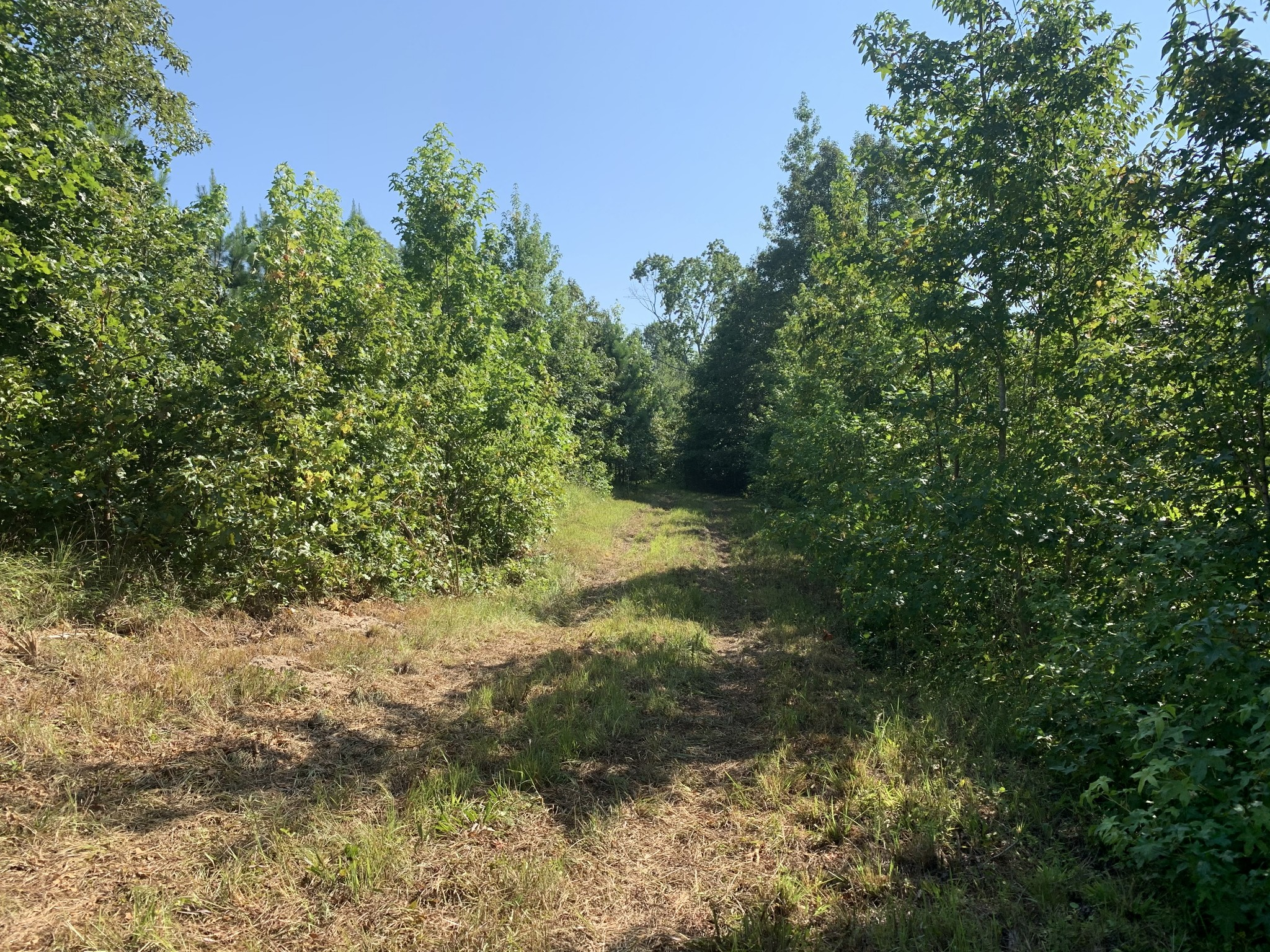 0 Little Texas Rd Property Photo - Leoma, TN real estate listing