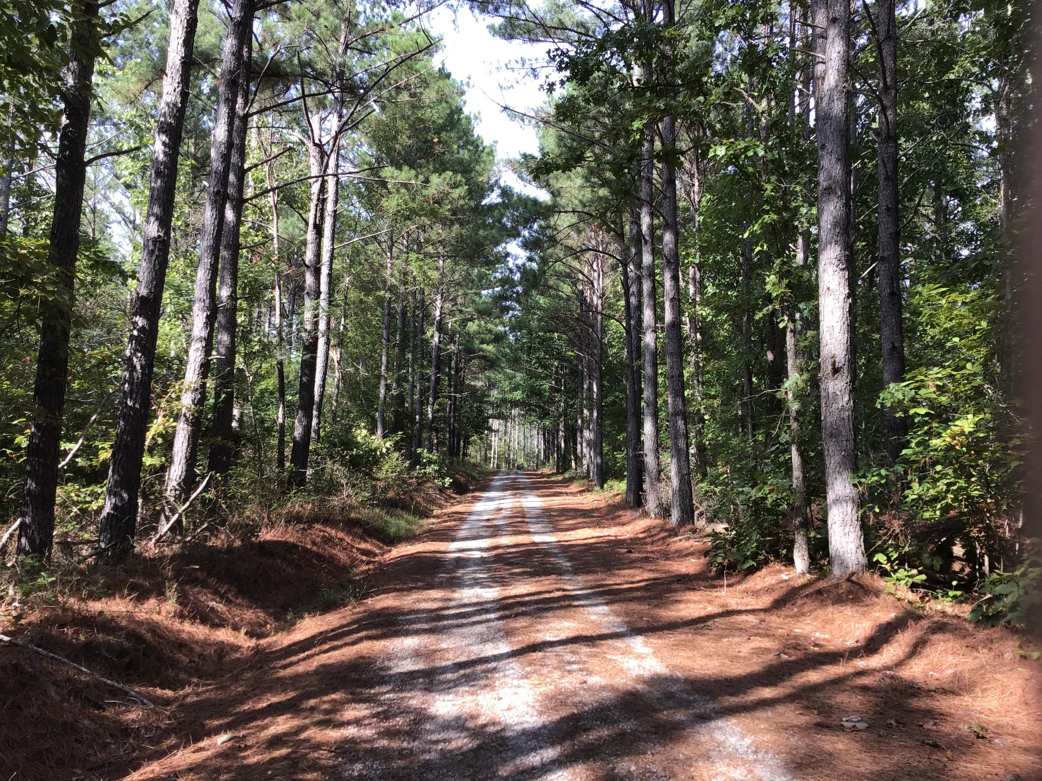 0A Carter Hollow Rd Property Photo - Linden, TN real estate listing