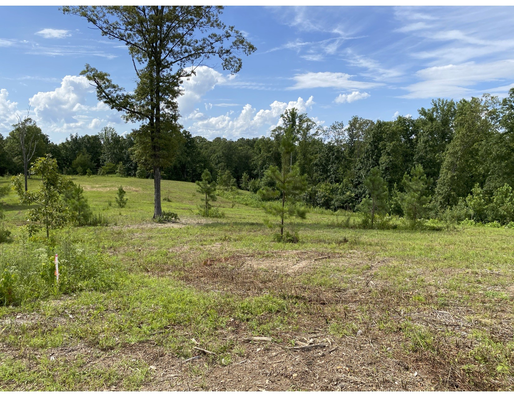 0 Vaughn lane Track 2 Property Photo - Lyles, TN real estate listing