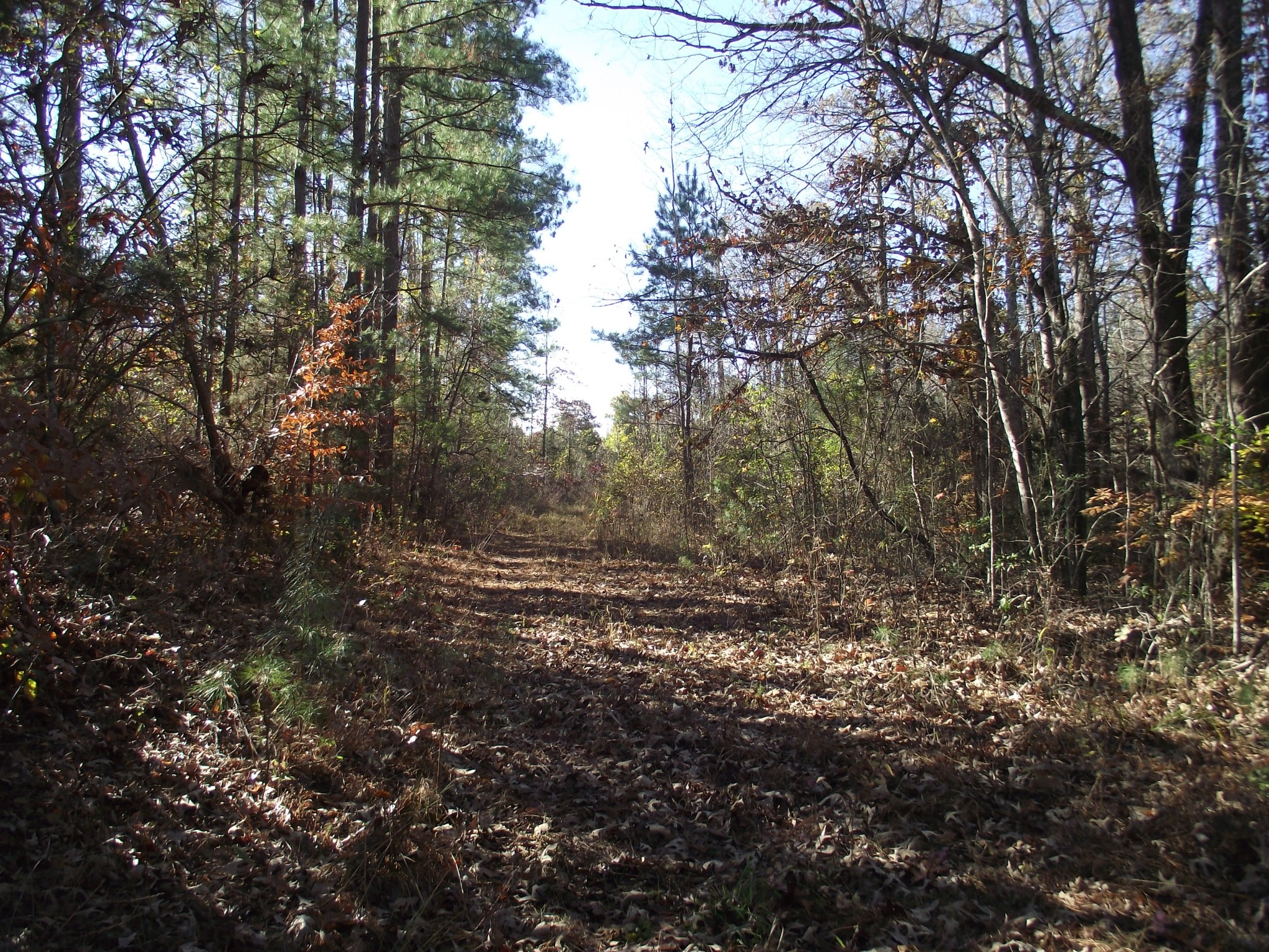 0 Bethel Purdy Rd Property Photo - Bethel Springs, TN real estate listing