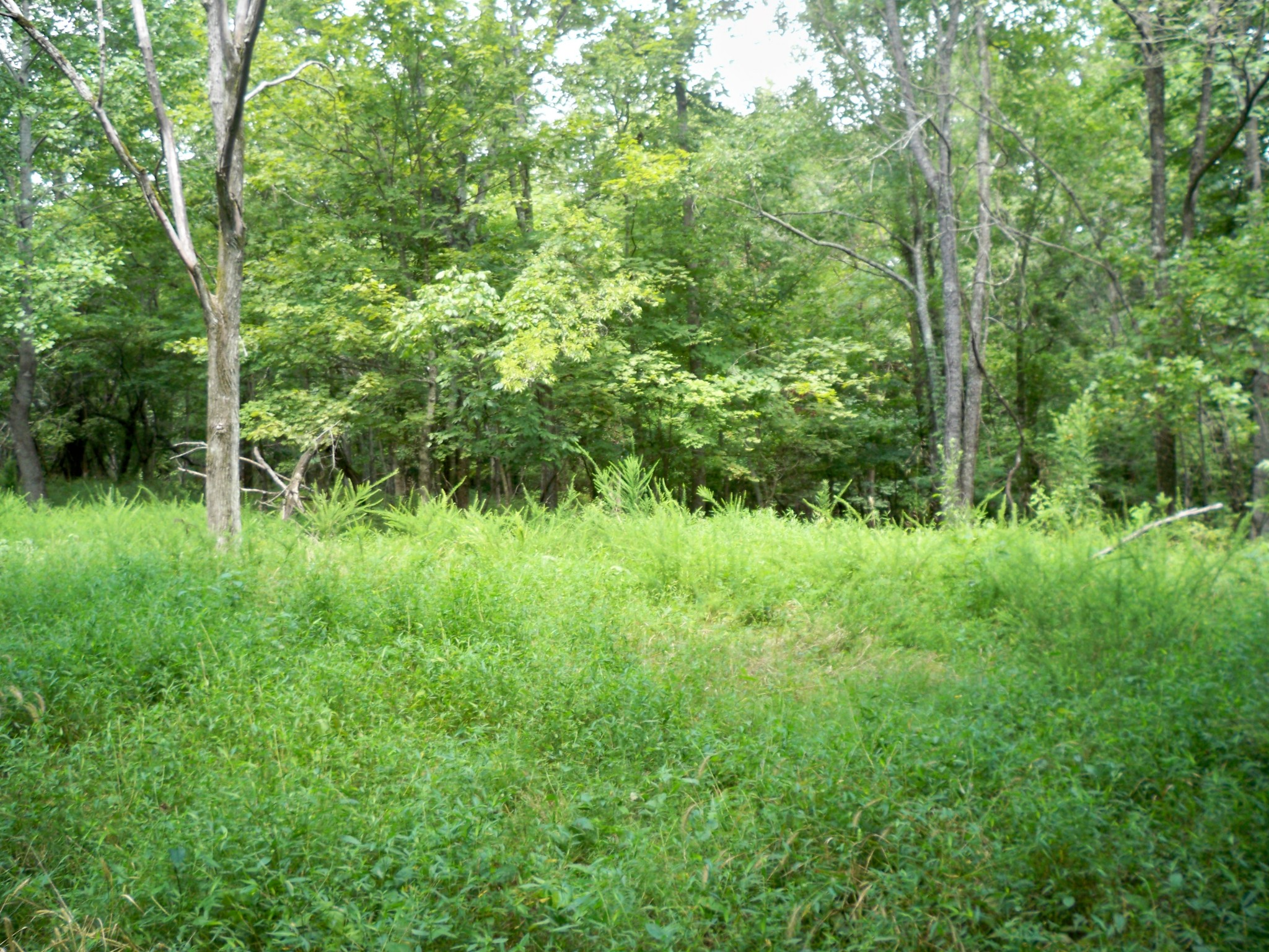 0 Halliburton Rd Property Photo - Vanleer, TN real estate listing