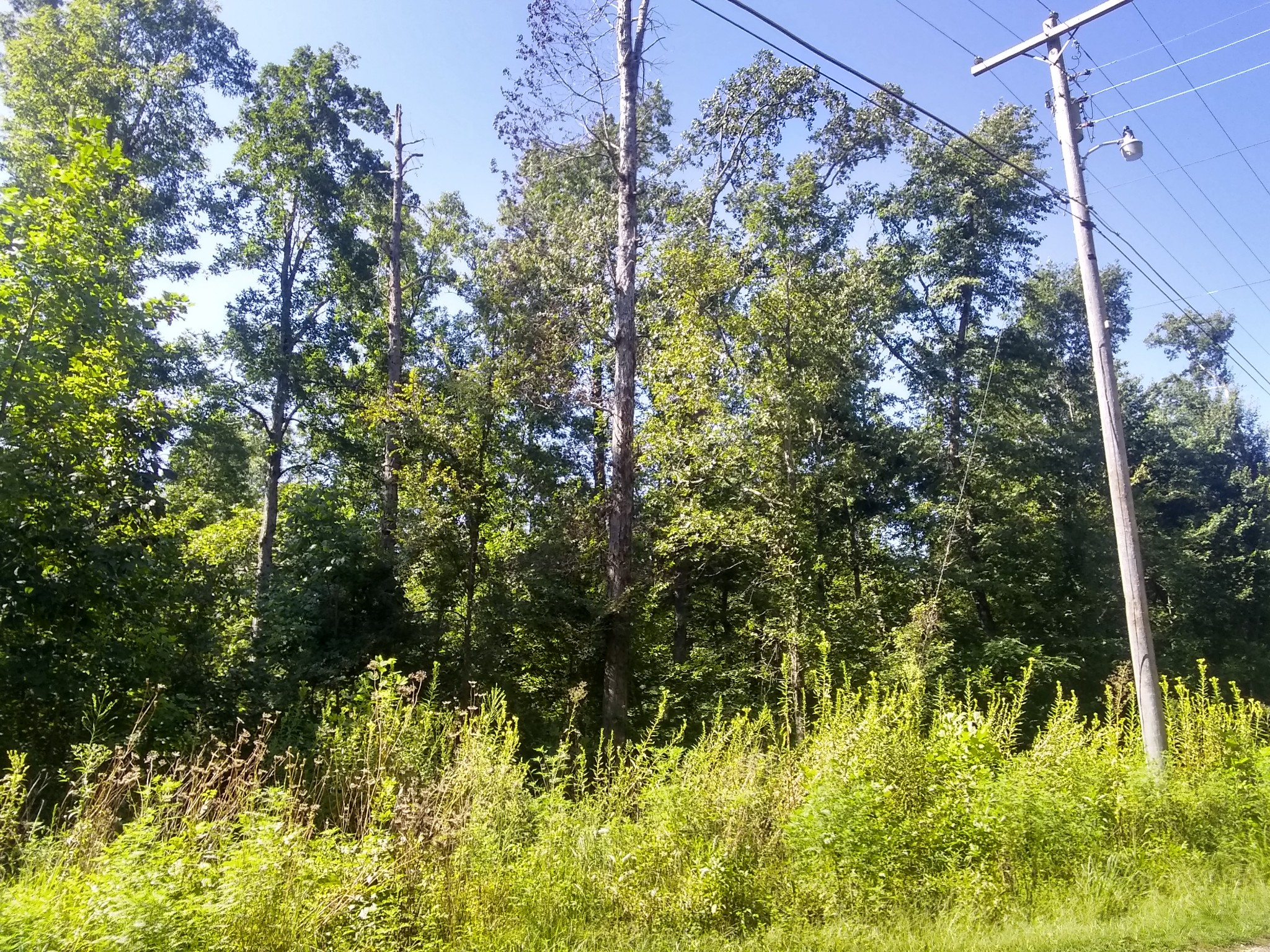 0 Wilkinstown Rd Property Photo - Parsons, TN real estate listing