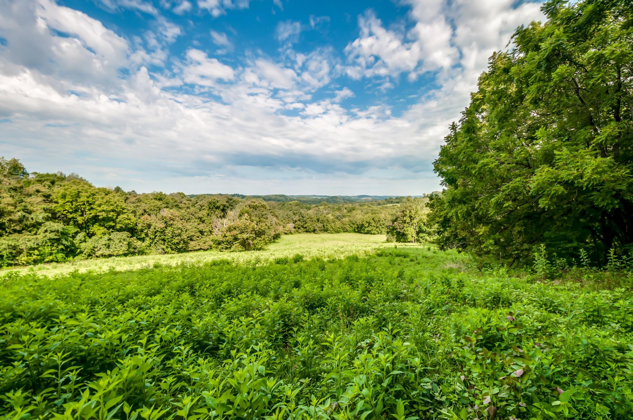 0 Dry Creek Rd E Property Photo - Mount Pleasant, TN real estate listing