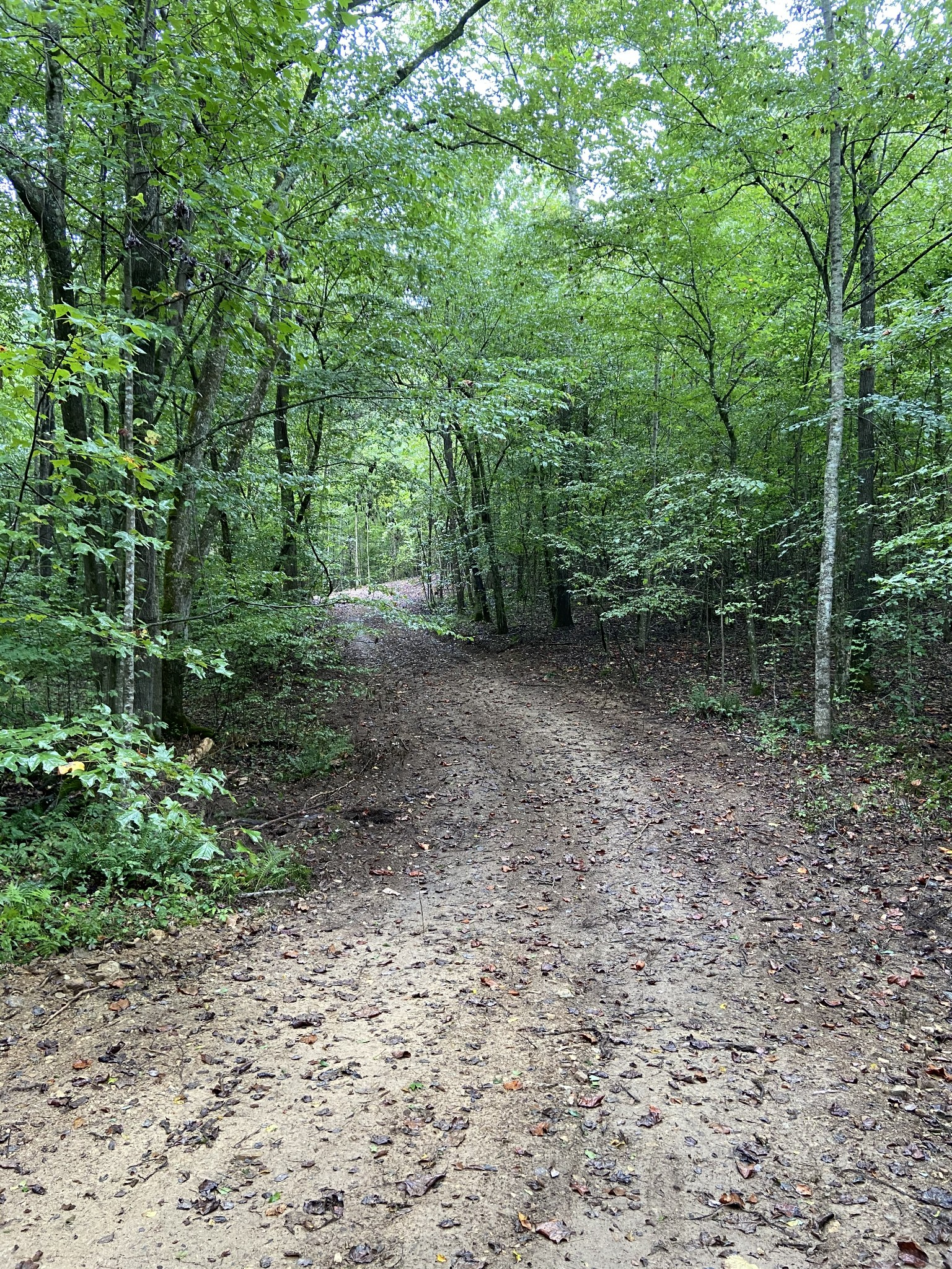 0 Tidwell Hollow Rd Property Photo - Iron City, TN real estate listing